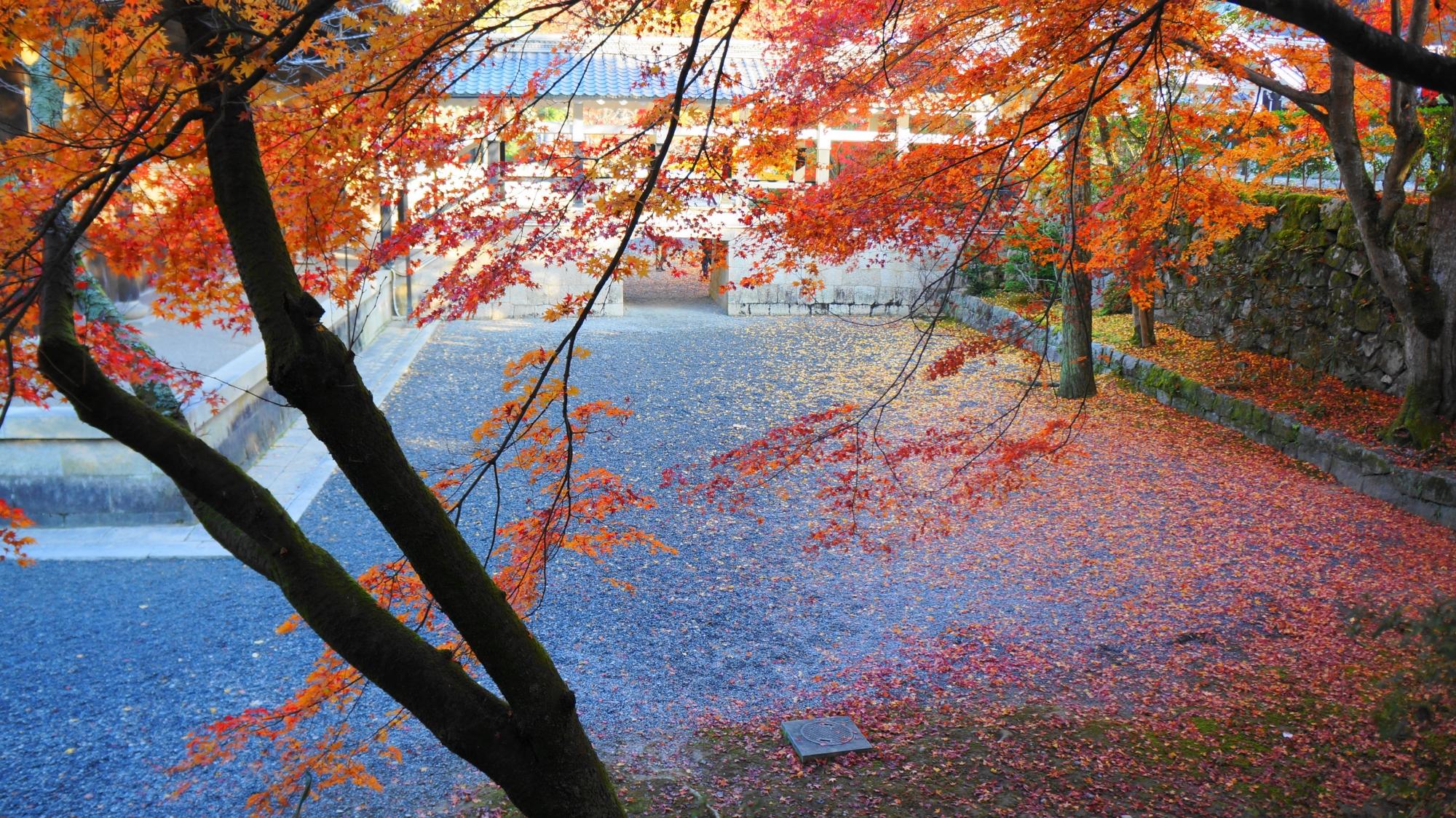 法堂の裏辺りの深い紅葉の情緒ある空間