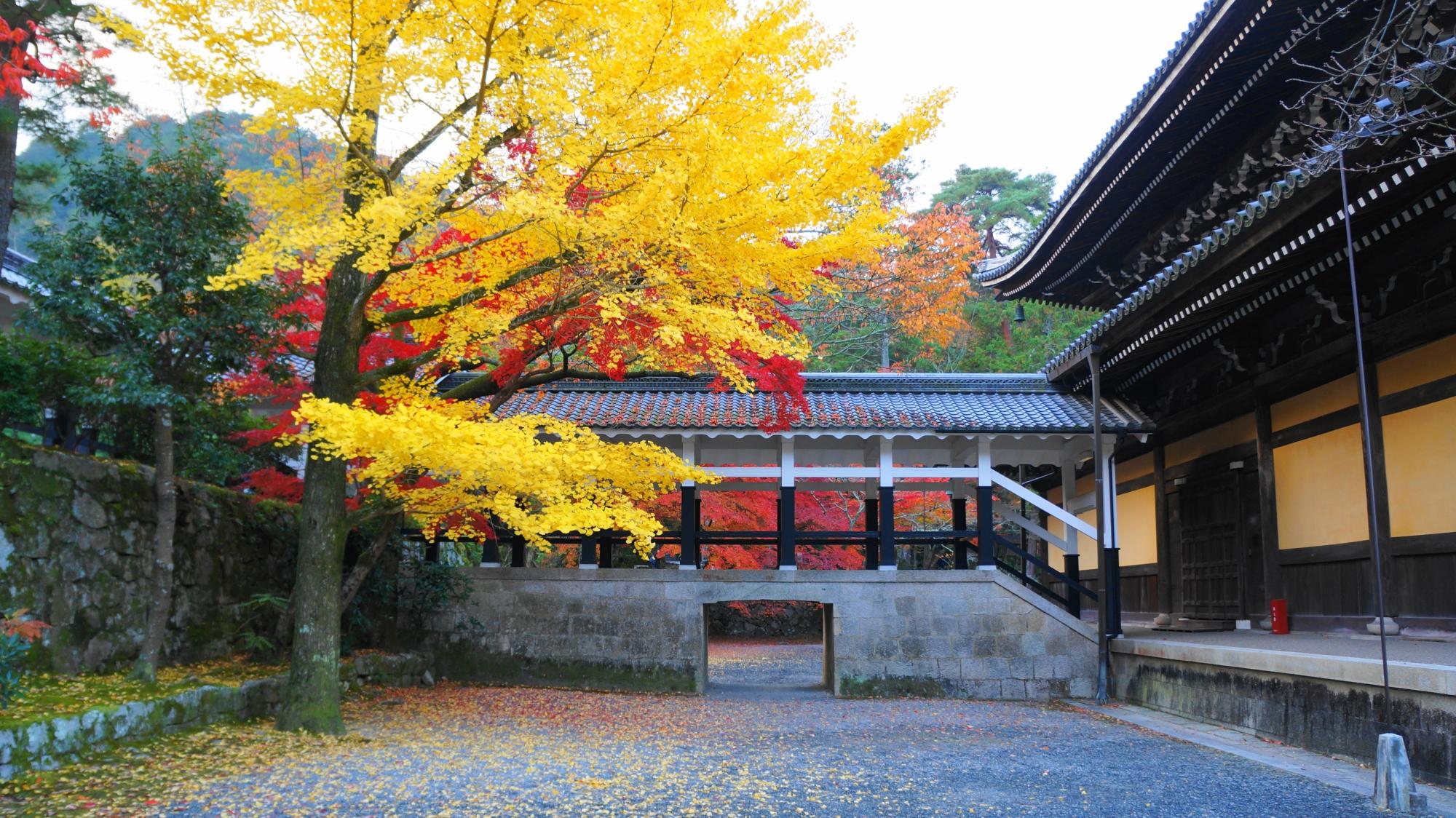 南禅寺の法堂の裏あたりの紅葉と銀杏