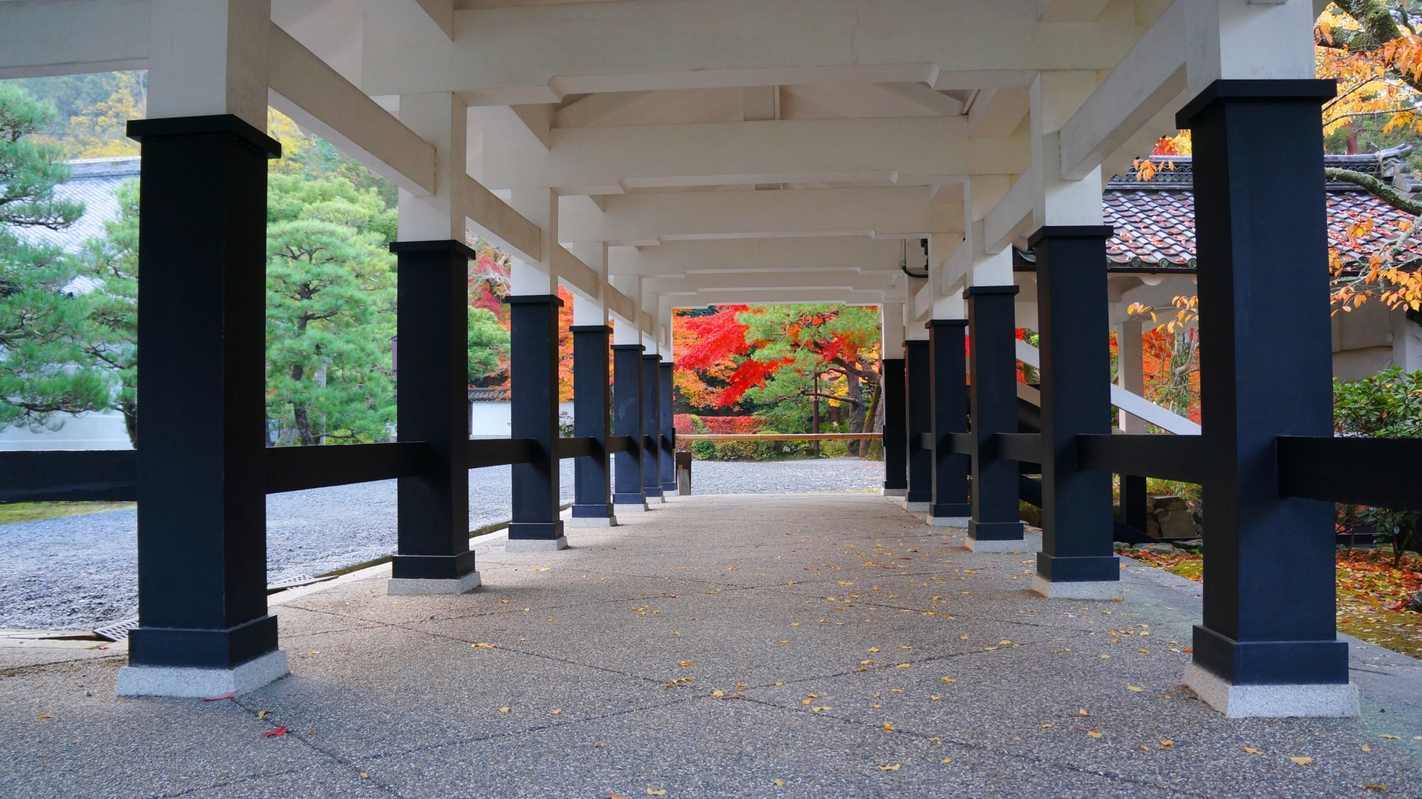 回廊の先で賑わう緑の松と赤い紅葉
