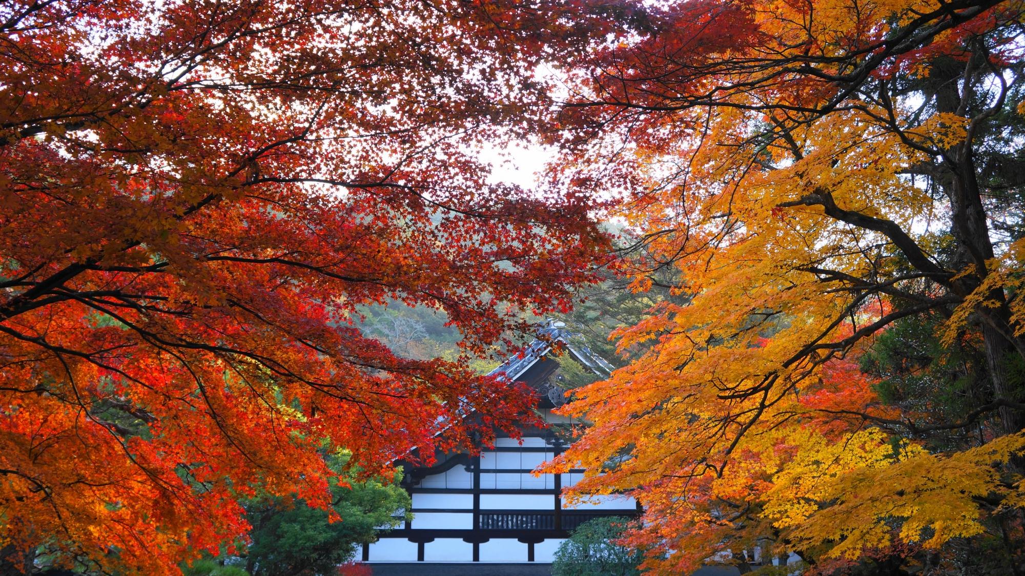 白壁を豪快に彩る赤や黄色の紅葉