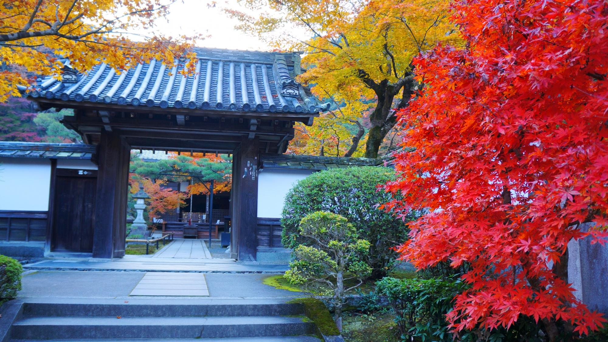 最勝院の山門を華やぐ色とりどりの紅葉