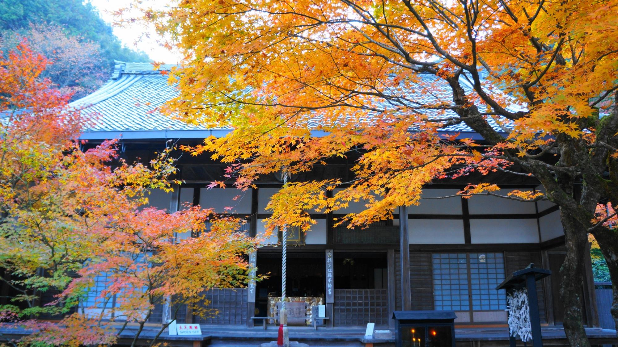 最勝院の本堂と華やかな紅葉