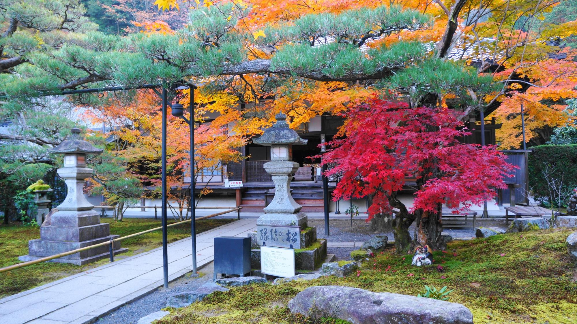 緑の苔や縁結びの松に映える艶やかな紅葉