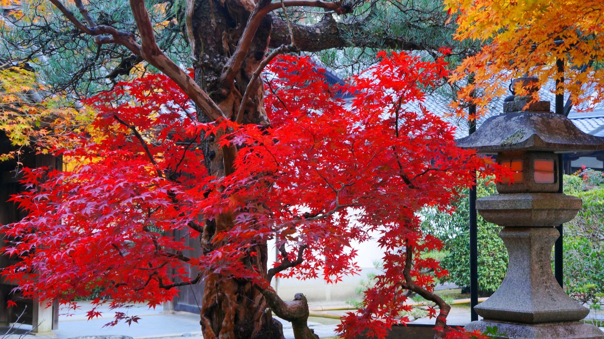 最勝院の燈籠を彩る真っ赤な紅葉