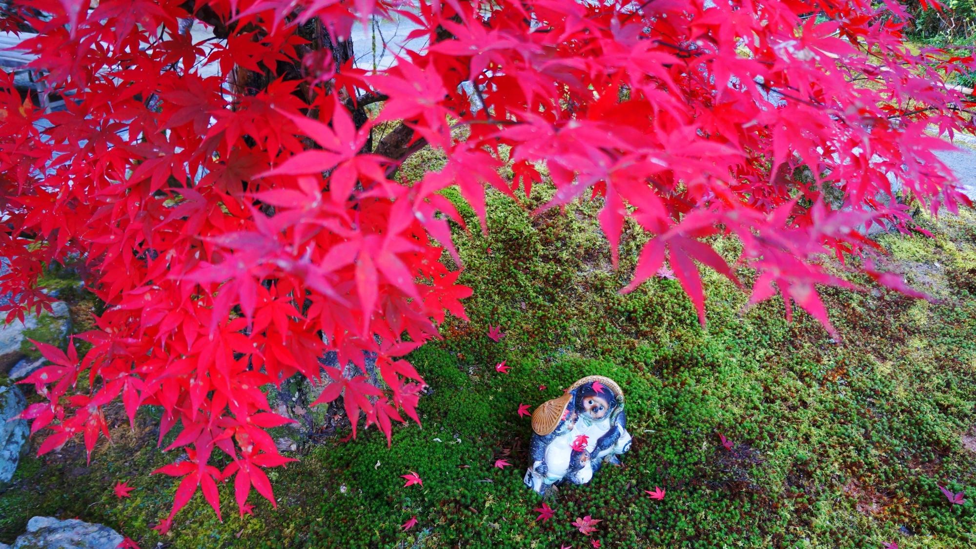 最勝院の素晴らしい紅葉やたぬきさんと秋色の情景