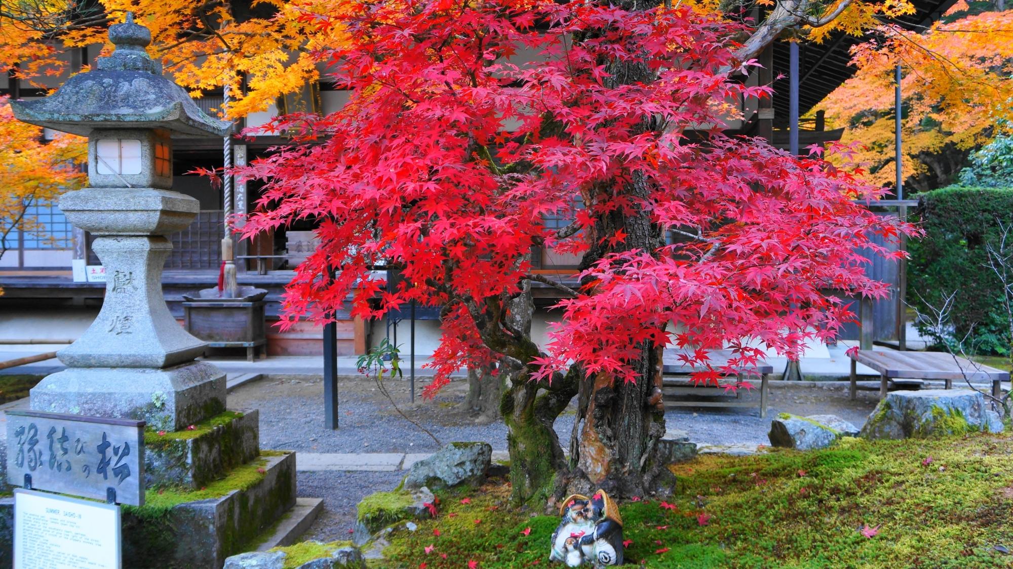 溢れる色とりどりの紅葉を見上げる狸