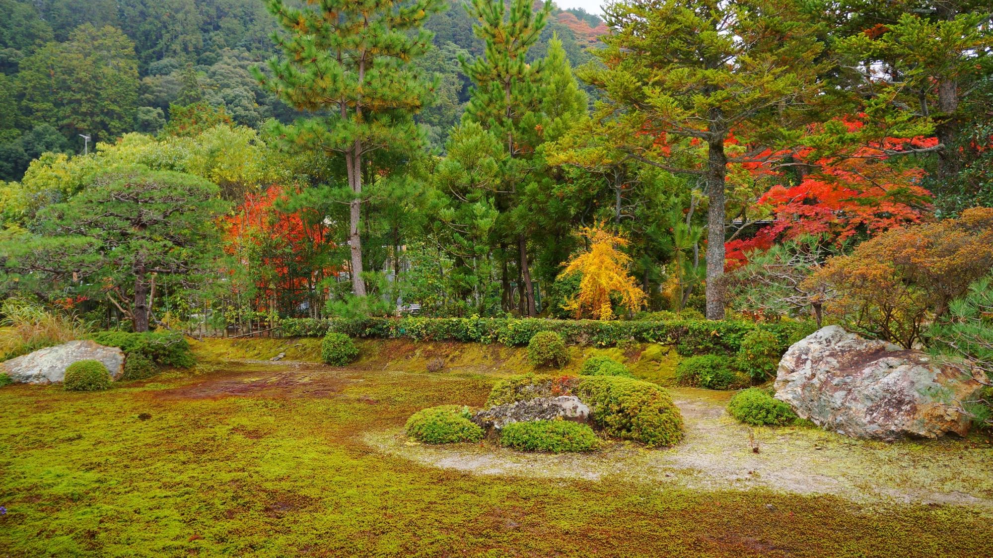 南陽院の多種多様な緑の中で色づく紅葉