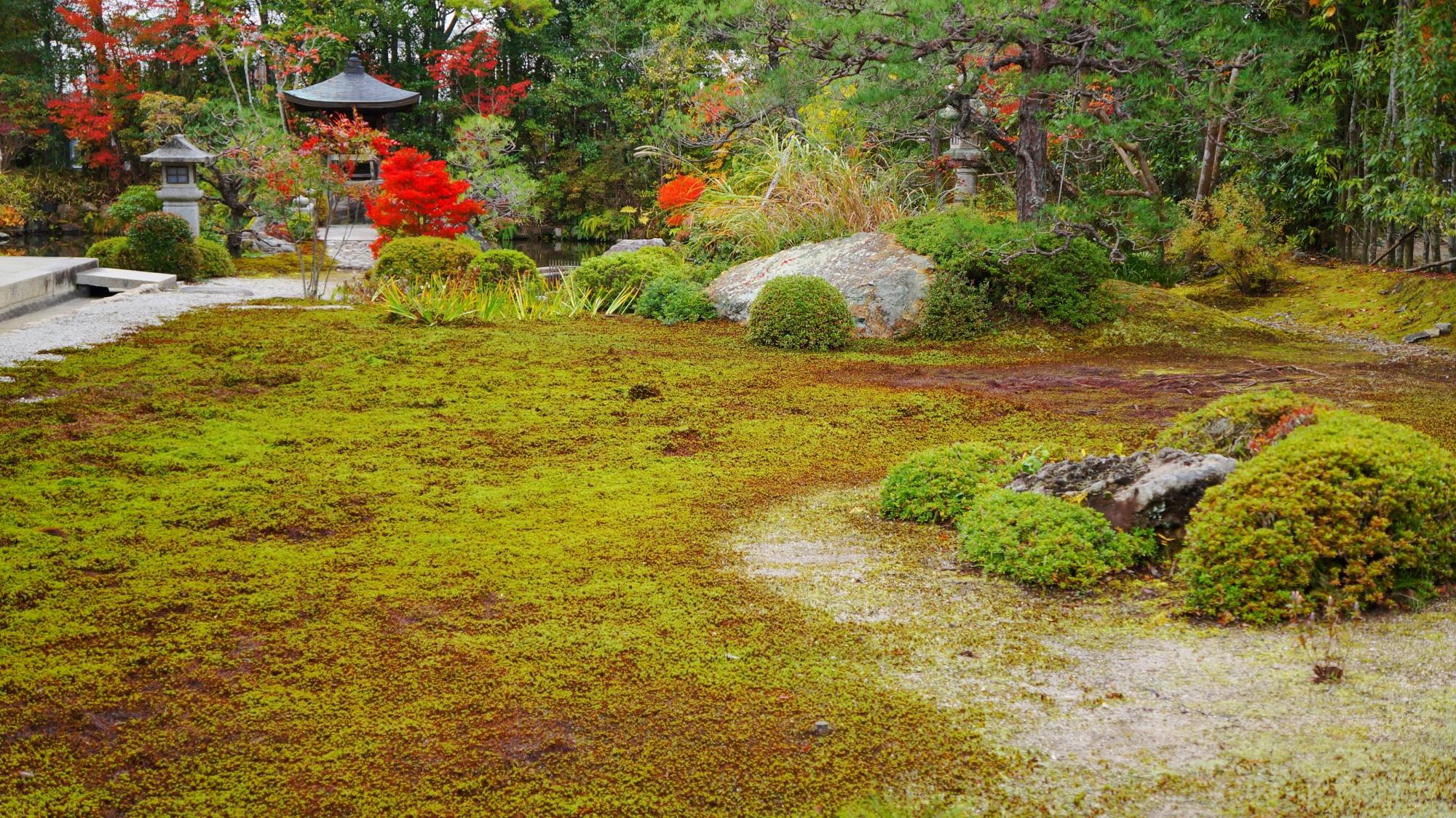 枯山水と池泉式の融合したような南陽院の庭園