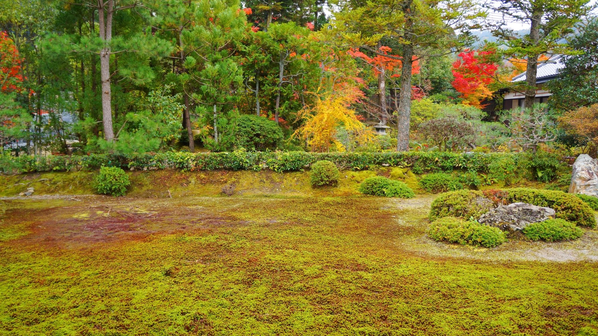 南陽院の奥では赤や黄色の多彩な紅葉が華やぐ苔の庭園