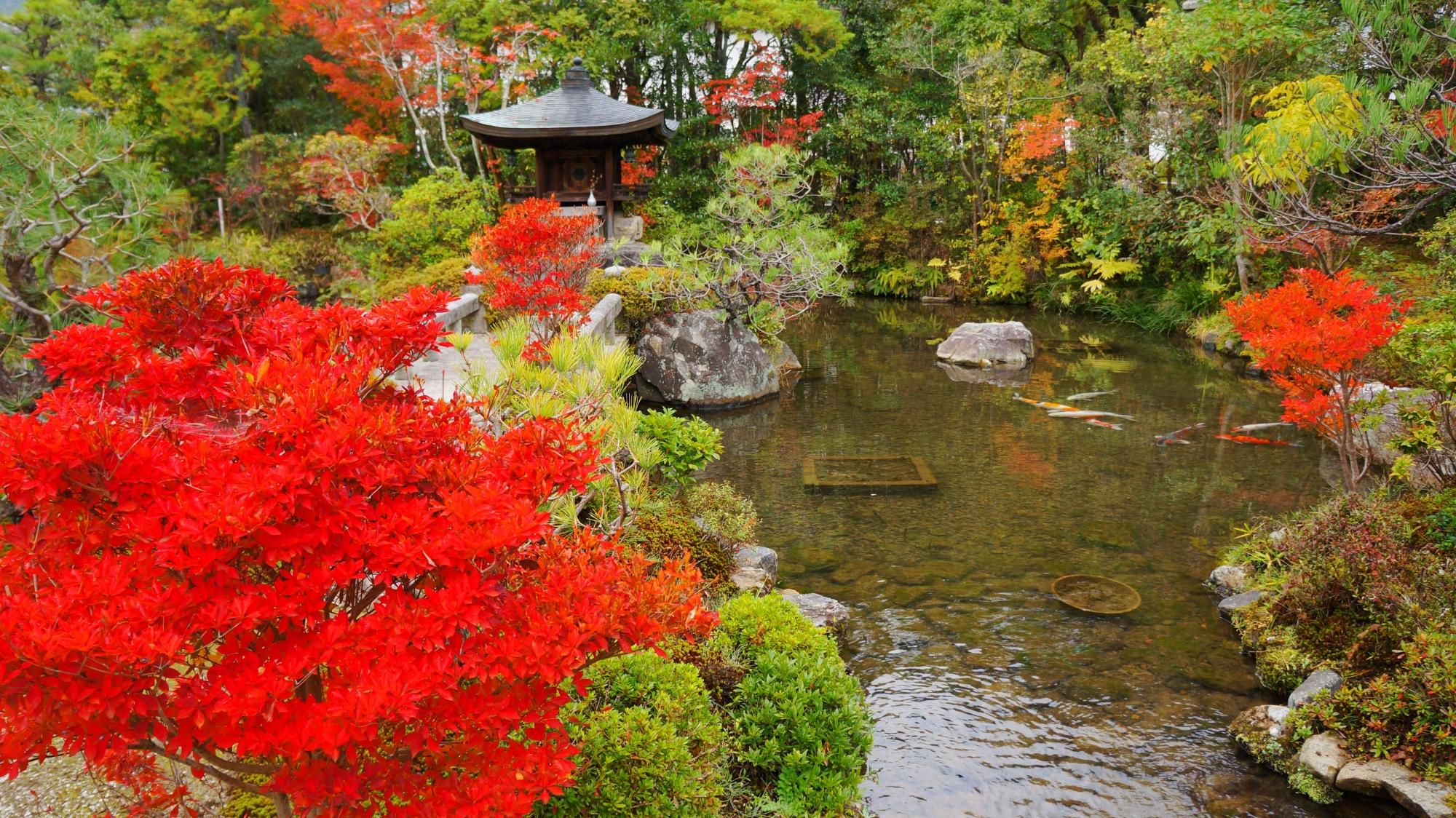 水辺を彩る燃えるような真っ赤なツツジの紅葉