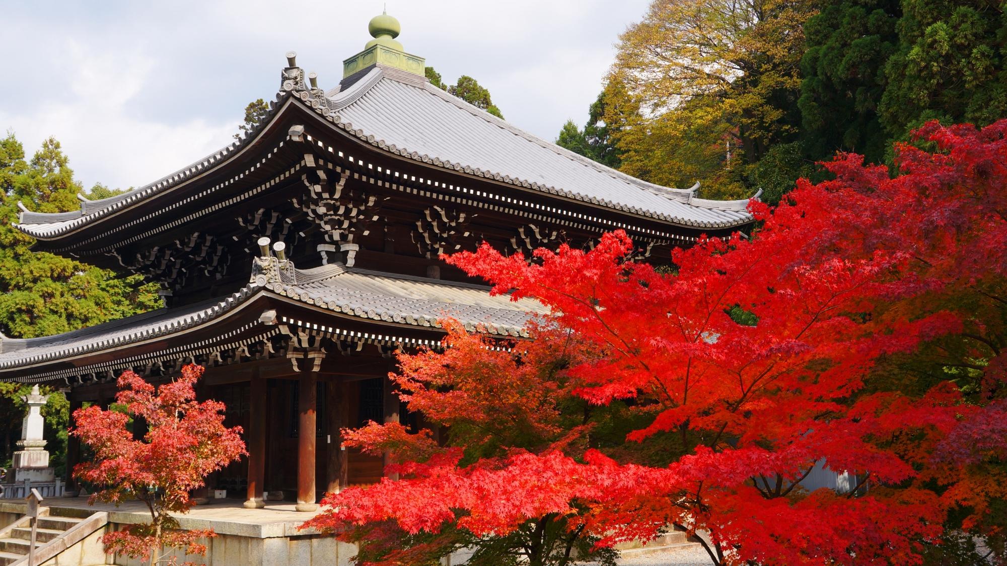 知恩院の経蔵を彩る真っ赤な紅葉