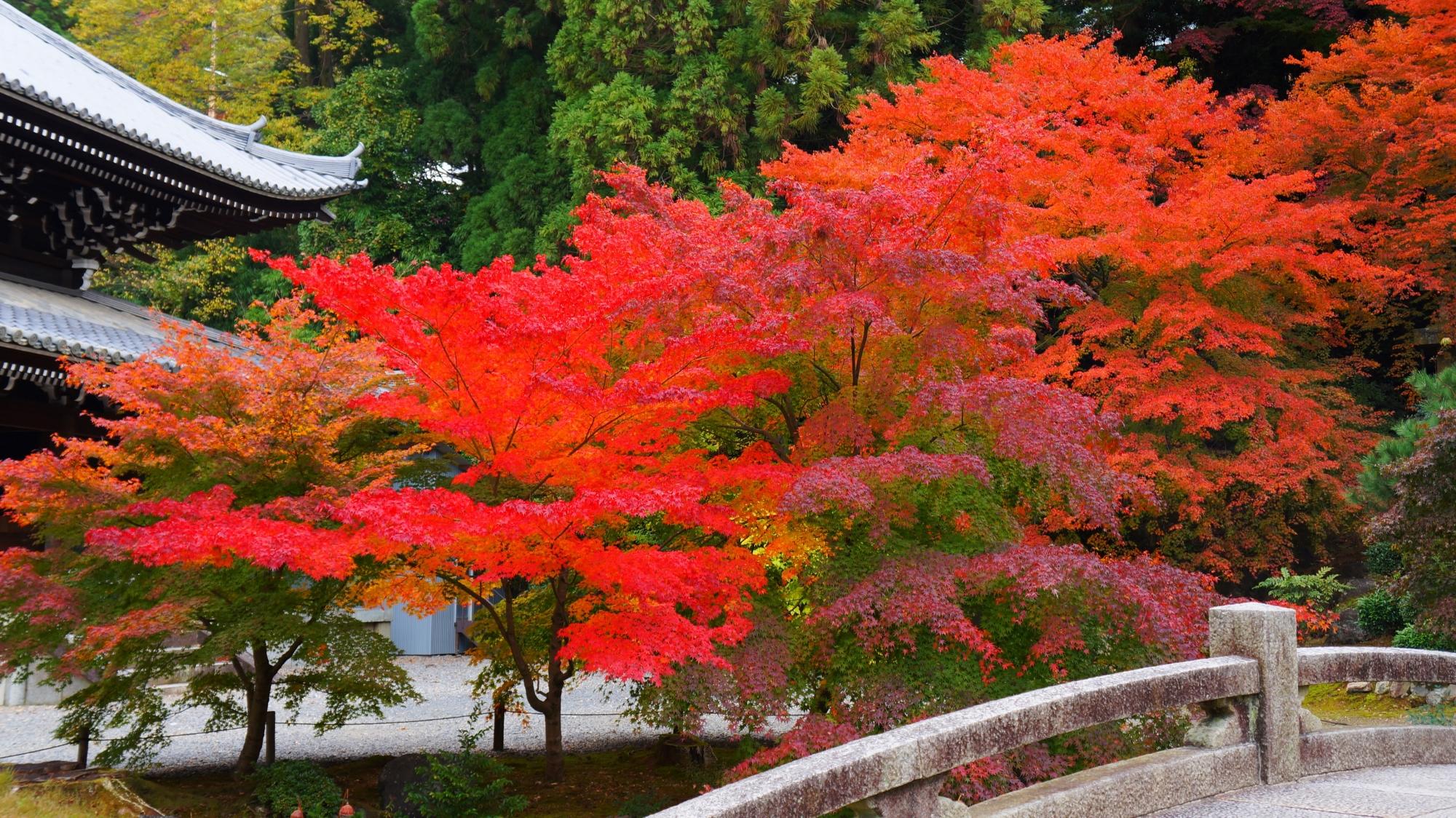 知恩院の経蔵前の華やぐ色とりどりの紅葉