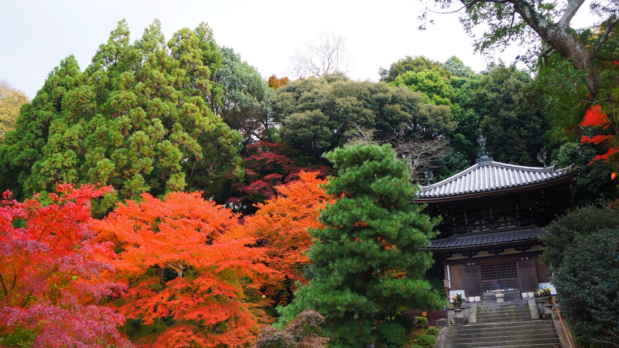 知恩院の納骨堂と多彩な紅葉