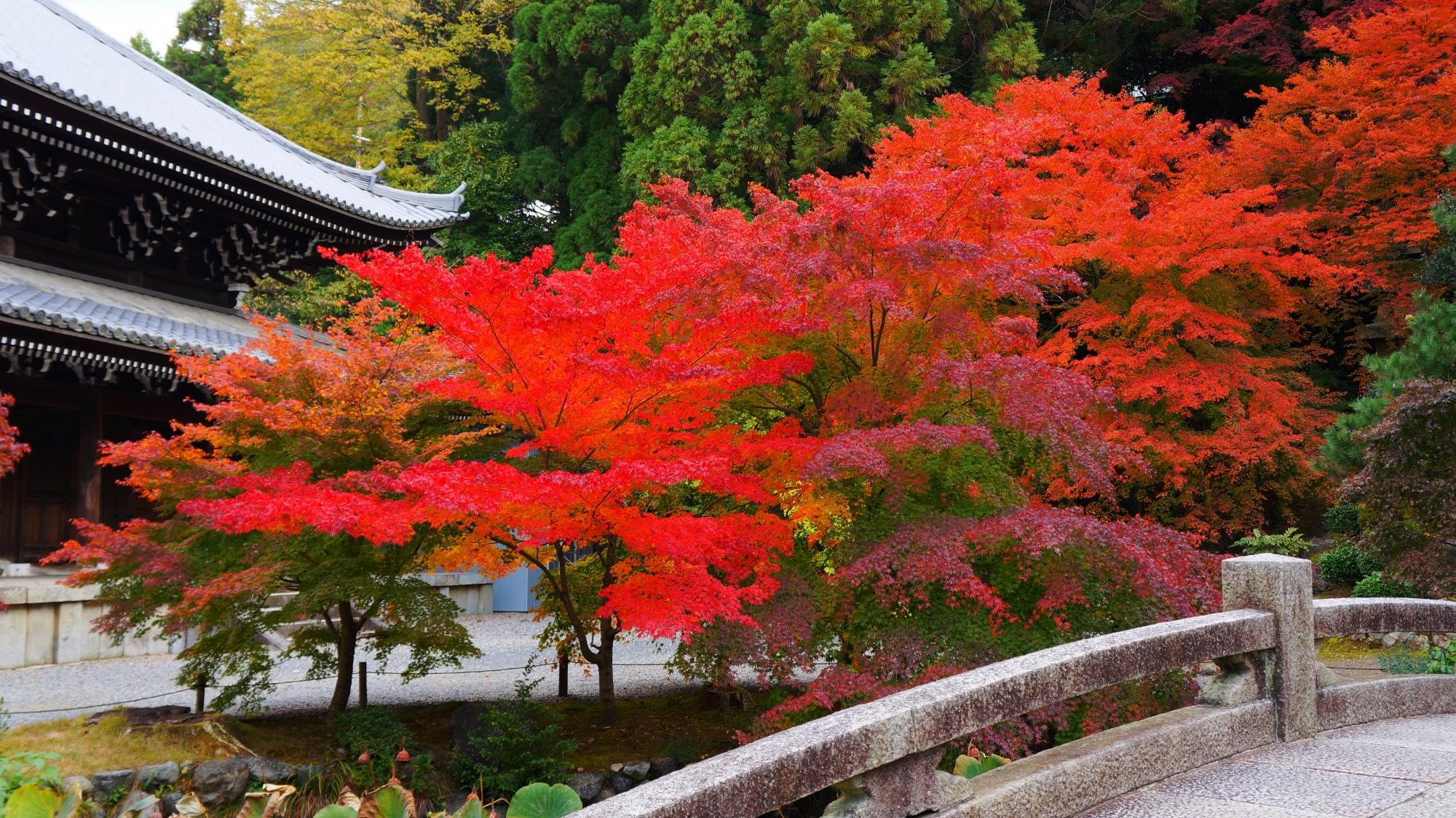 知恩院の納骨堂や経蔵の素晴らしい紅葉と秋の情景