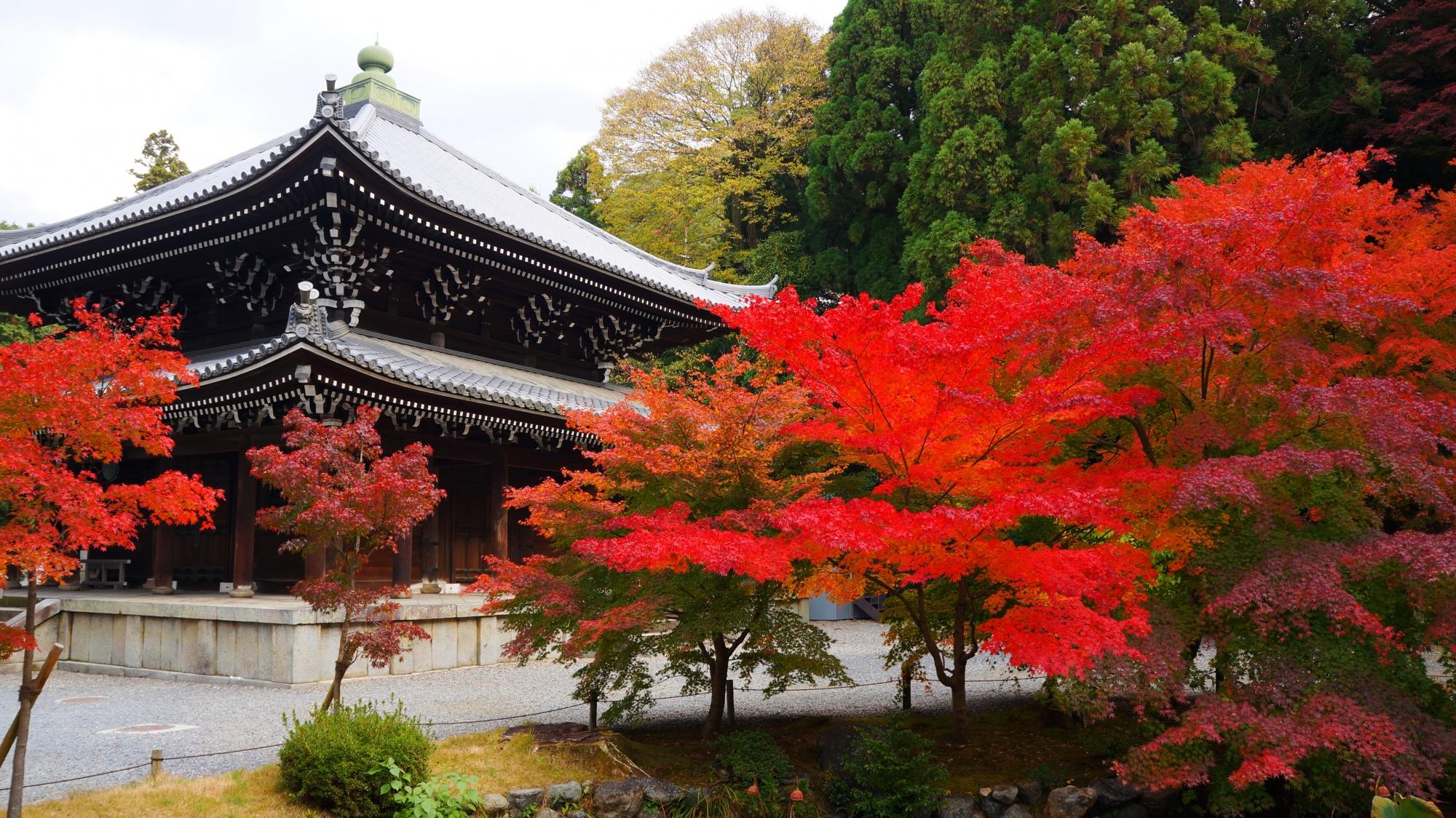 深い緑や風情ある境内の中で目を引くような鮮やかな色合いの紅葉