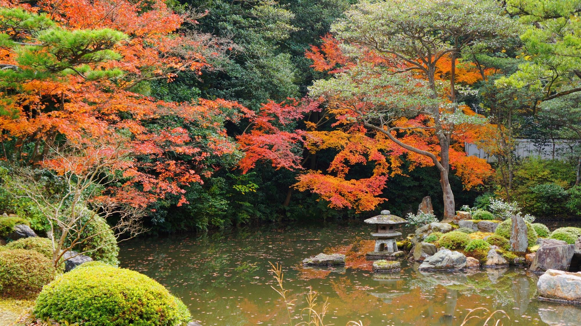 知恩院方丈庭園の水辺を華やぐ多彩な紅葉
