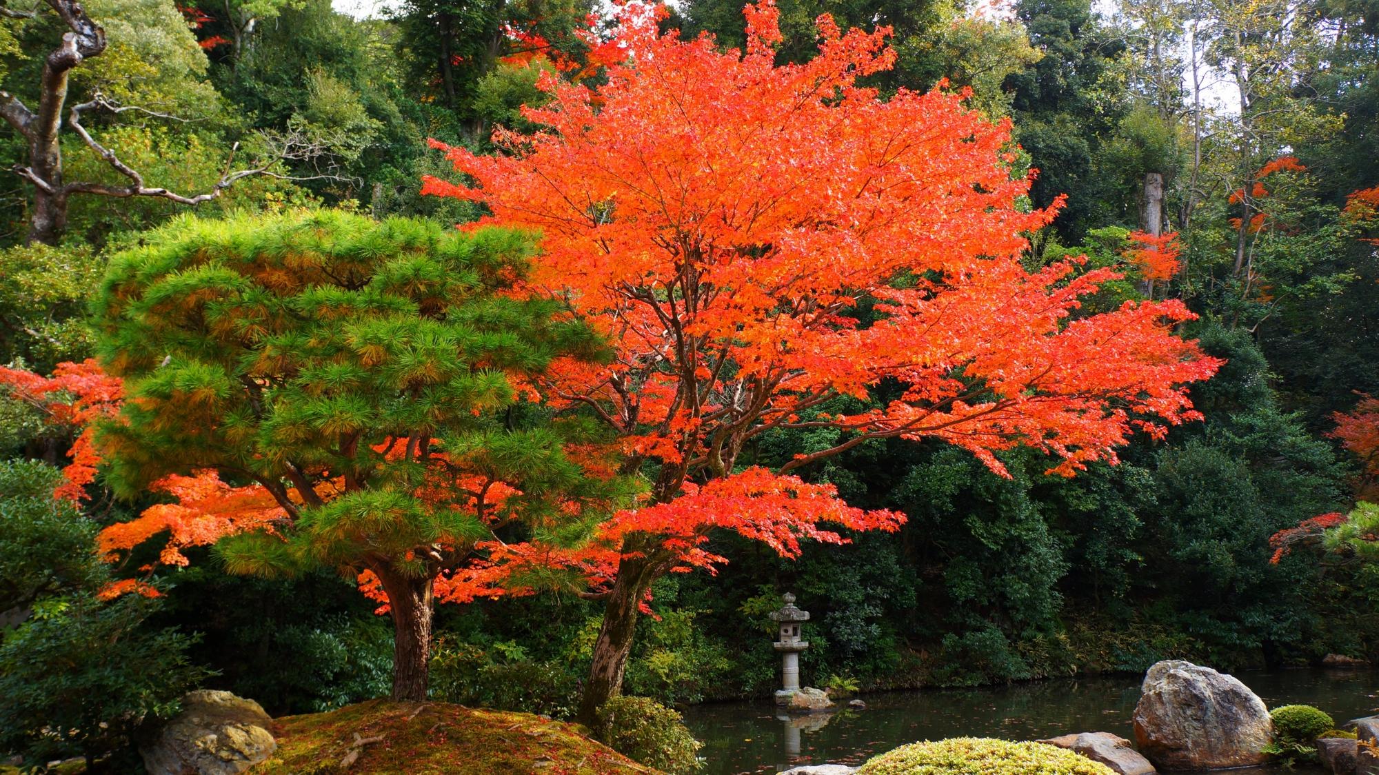 知恩院方丈庭園の水辺と緑を彩る鮮やかな紅葉が