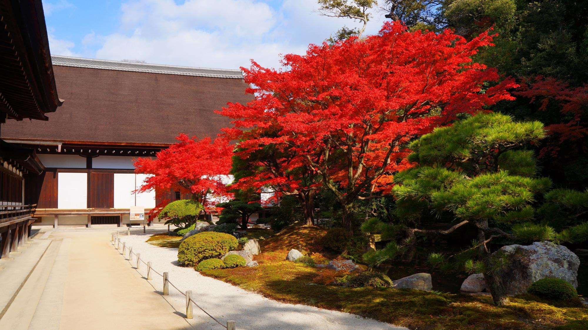 知恩院の大方丈東側の庭園の凄すぎる燃えるような真赤な紅葉