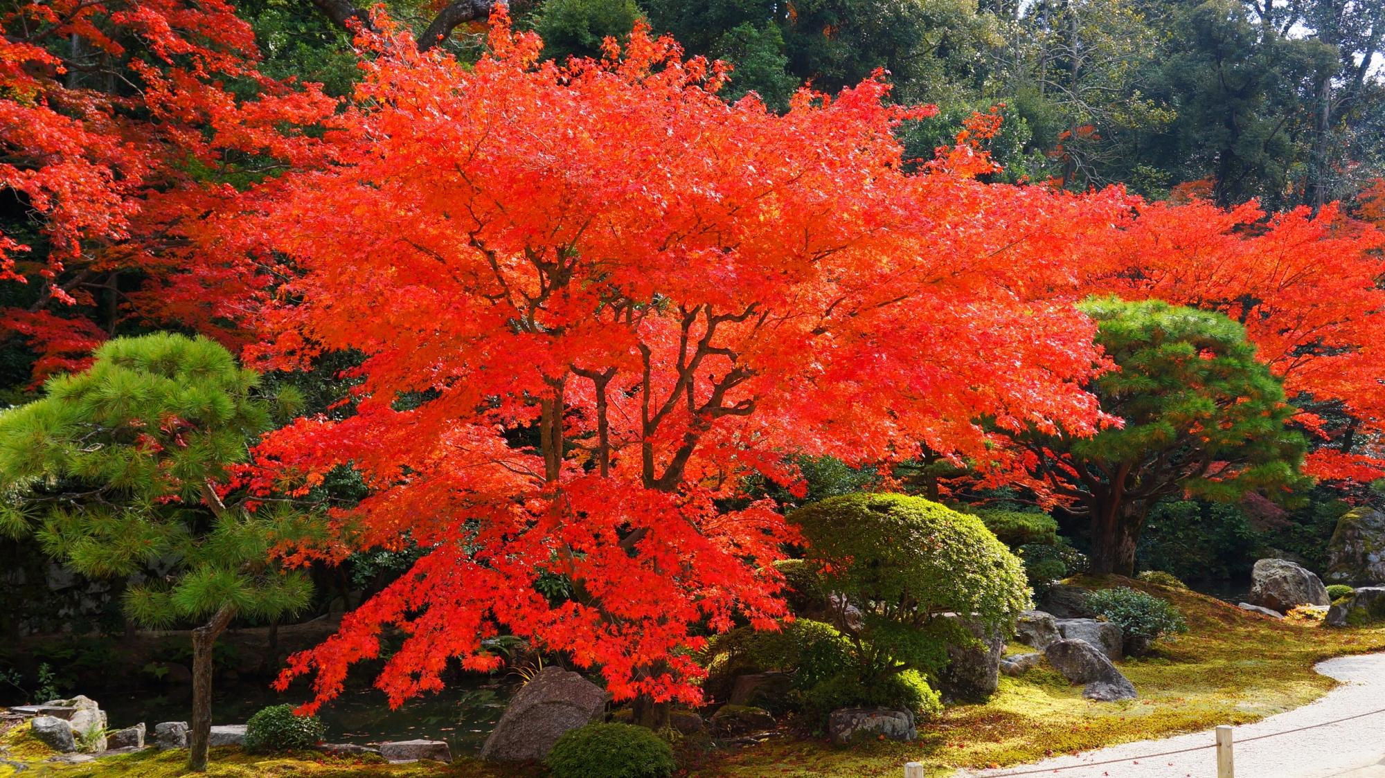 高画質 写真 知恩院方丈庭園 紅葉
