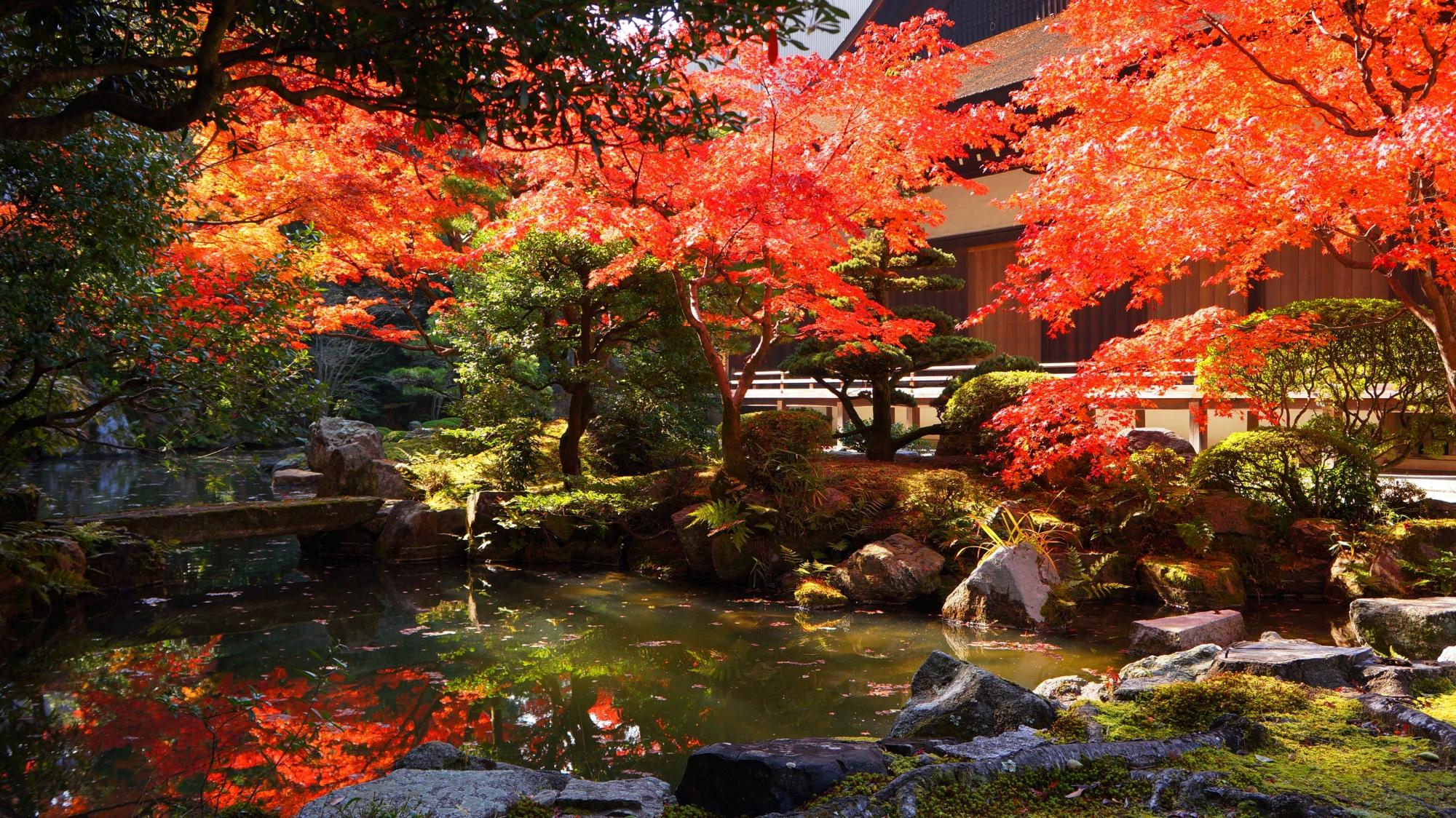 知恩院方丈庭園の水辺を染める華やかな紅葉と水鏡