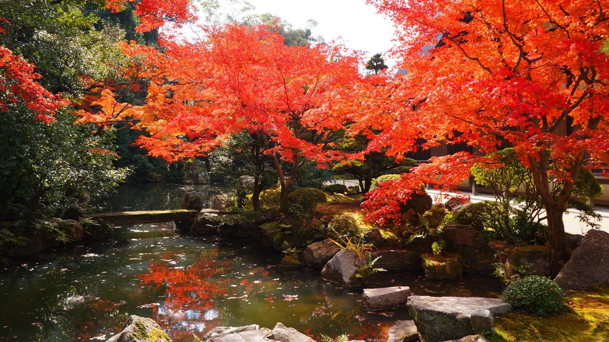 紅葉の意外な穴場の知恩院方丈庭園