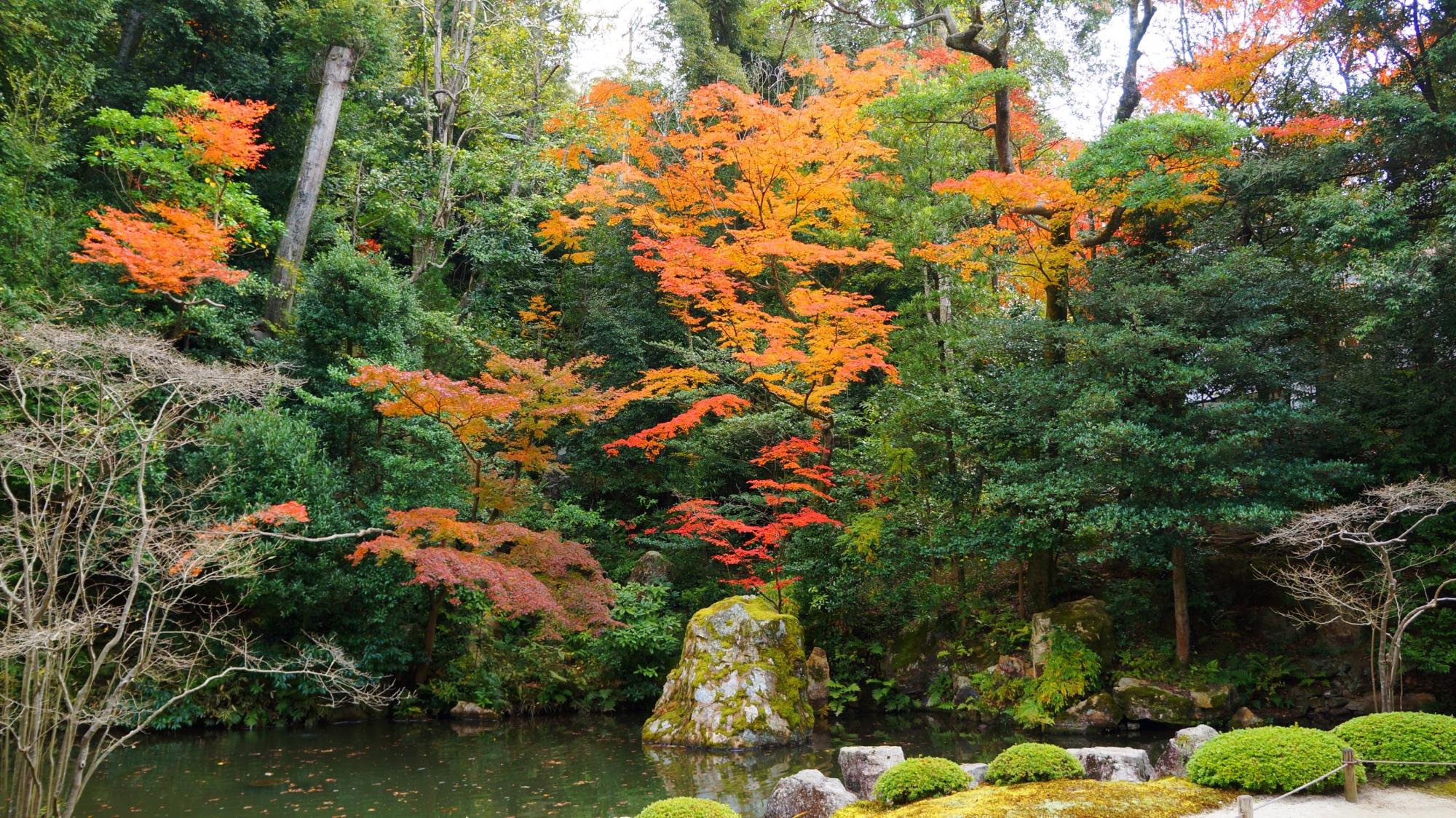 池の後ろを覆う深い緑と上品な彩りの紅葉