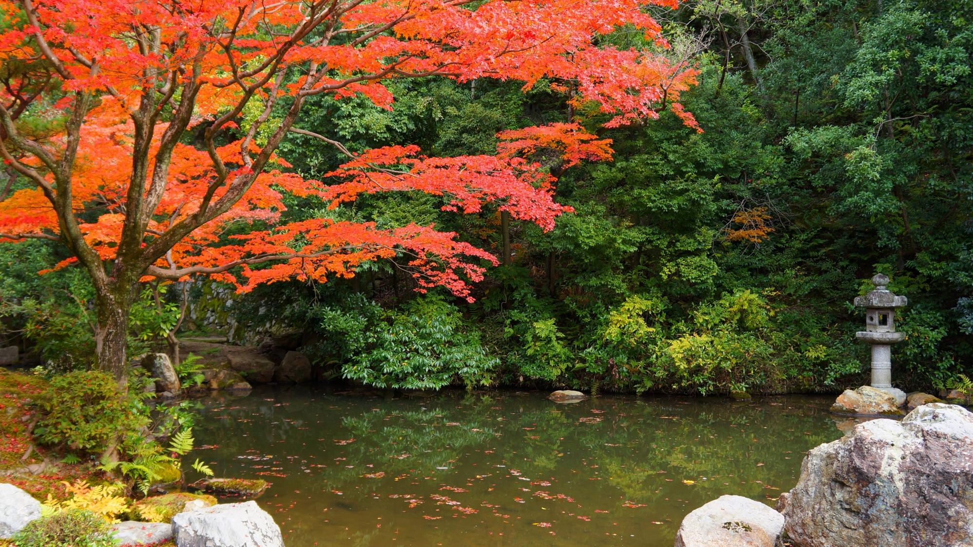 水辺と緑を彩る燈籠が演出する優雅な紅葉