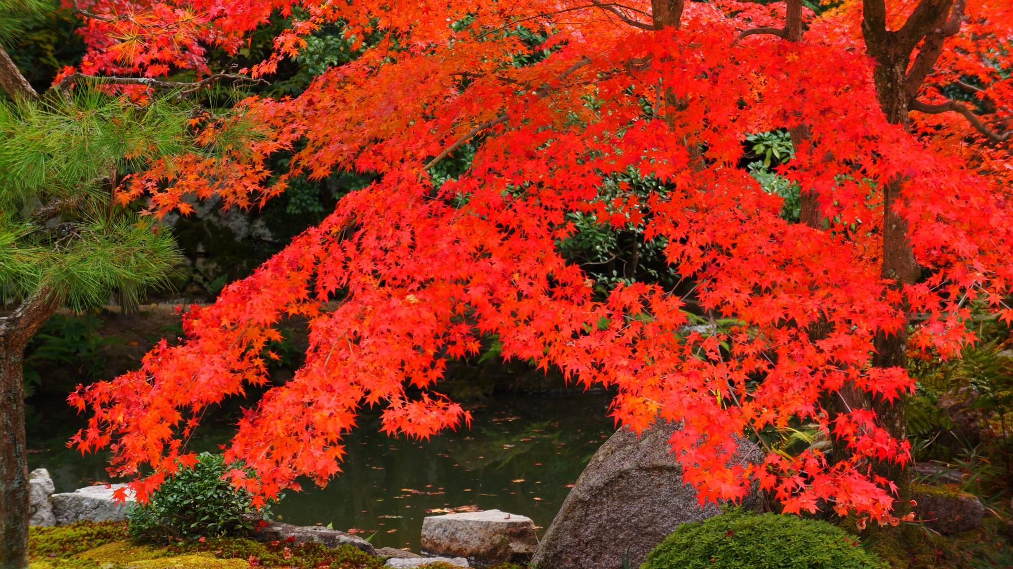 緑と水の庭園を染める真紅の紅葉