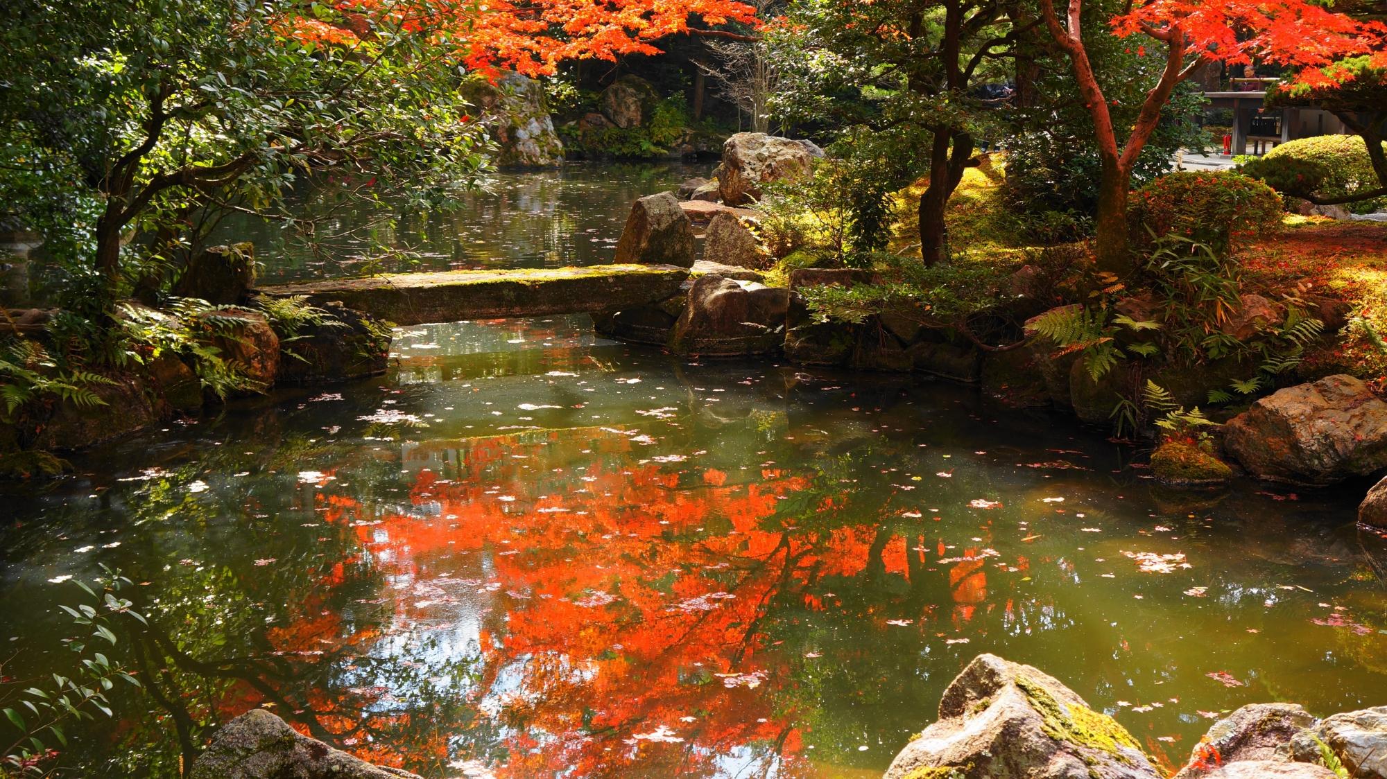 知恩院方丈庭園の煌く紅葉の水鏡