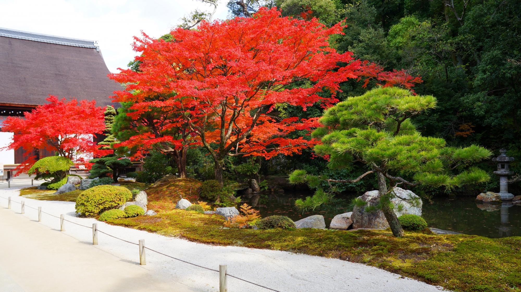 知恩院方丈庭園の素晴らしい紅葉と秋の情景
