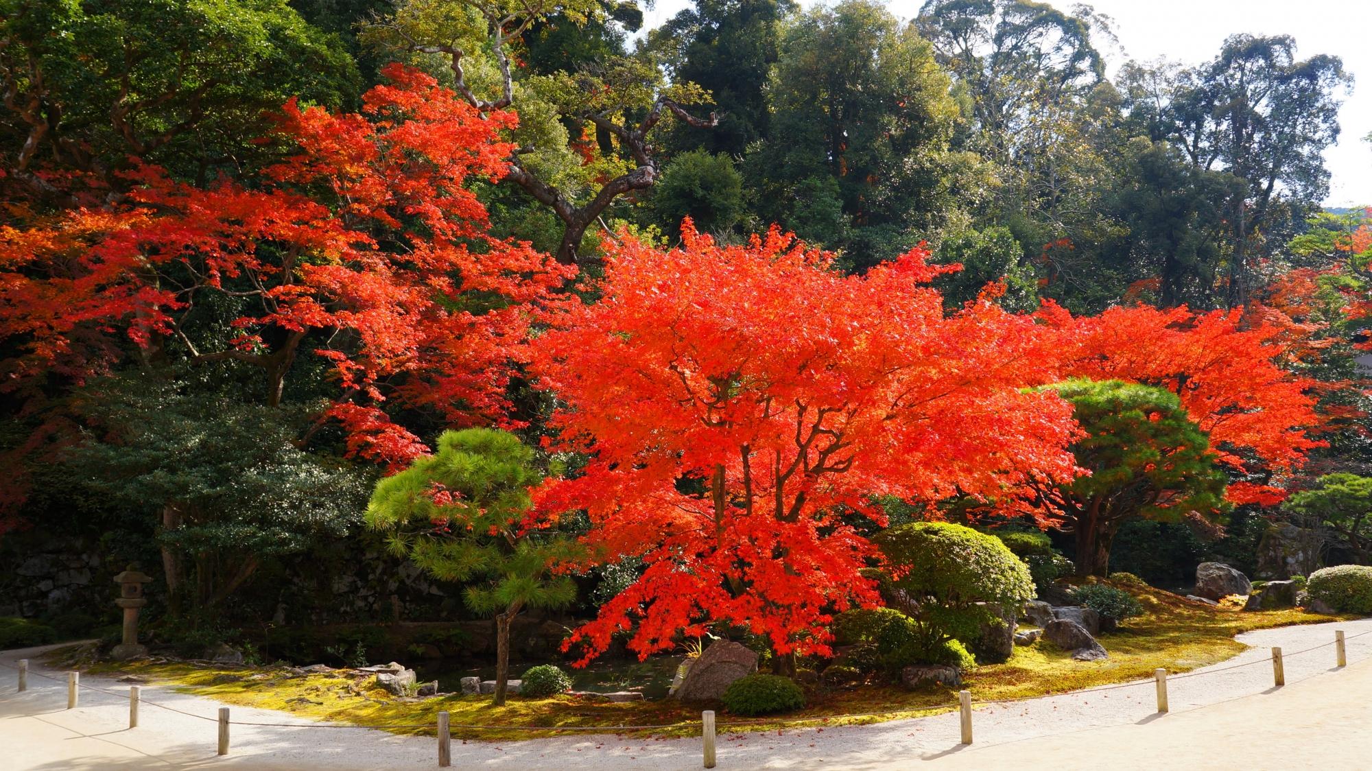 翼のように枝を広げて庭園を彩る紅葉