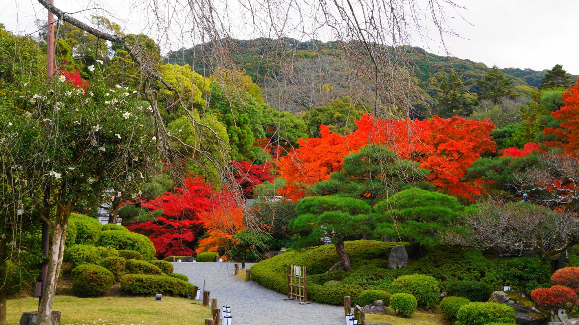 松やサツキの刈り込みなどの多様な緑から溢れ出す友禅苑の紅葉