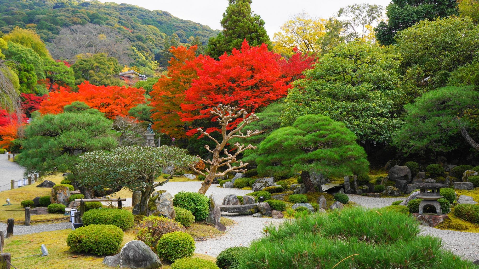 彩り豊かな絶品の秋の知恩院友禅苑