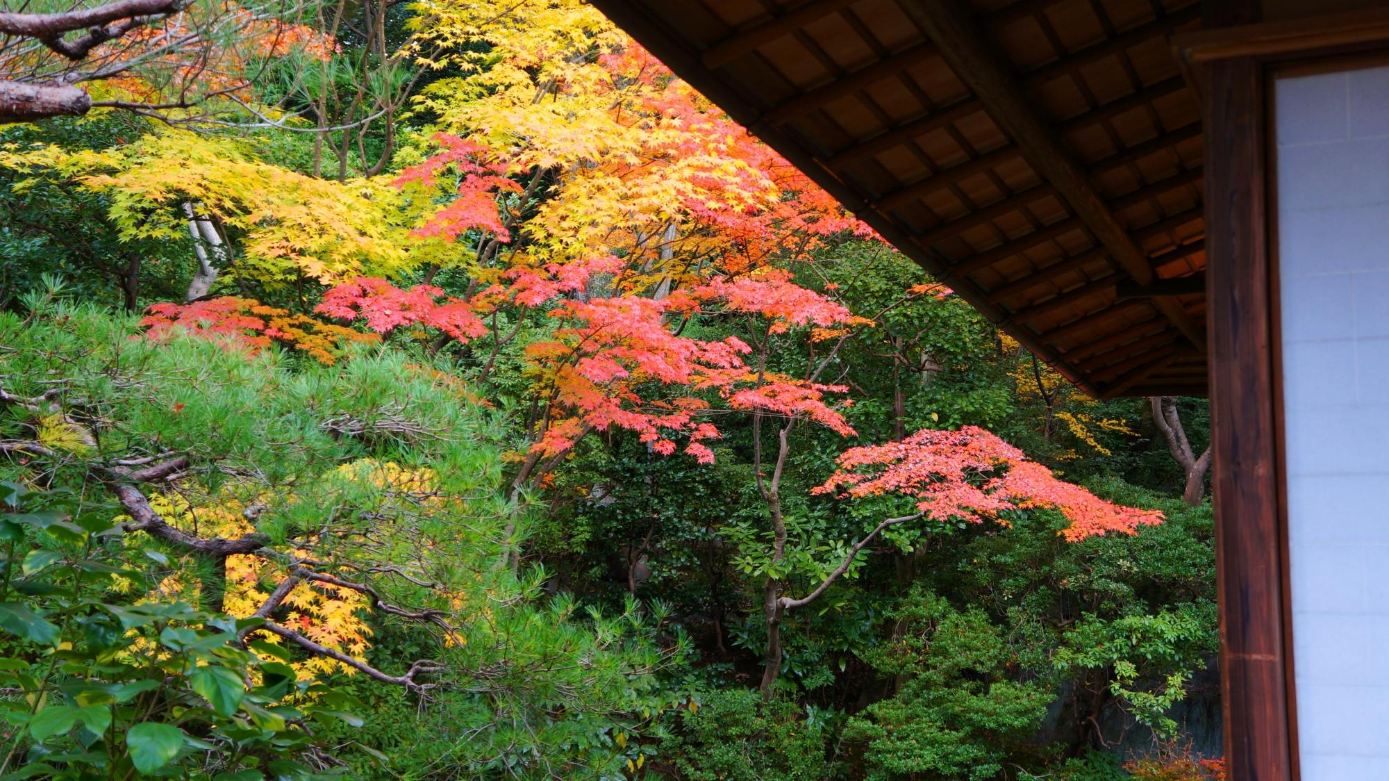白寿庵の庇の向こうに見える上品な紅葉
