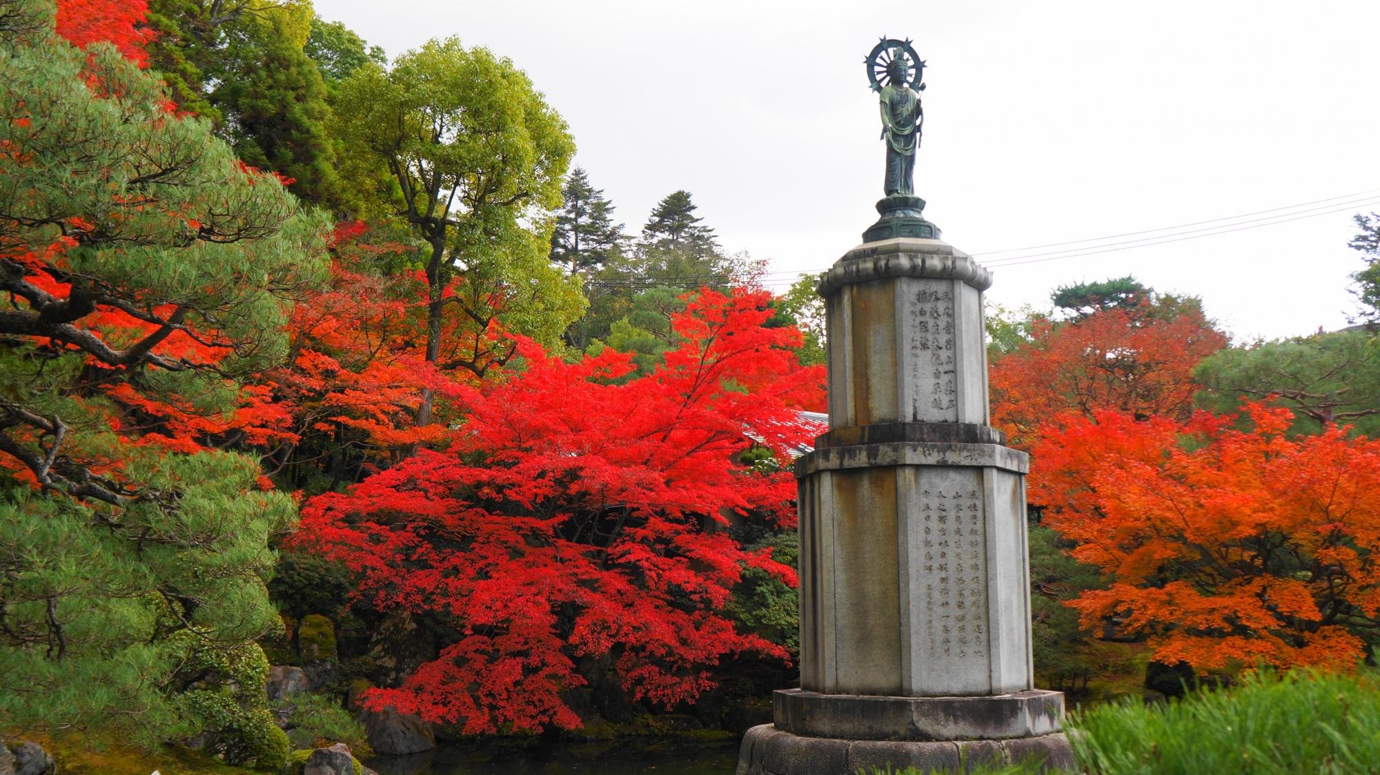 友禅苑の溢れる最高の色づきの紅葉