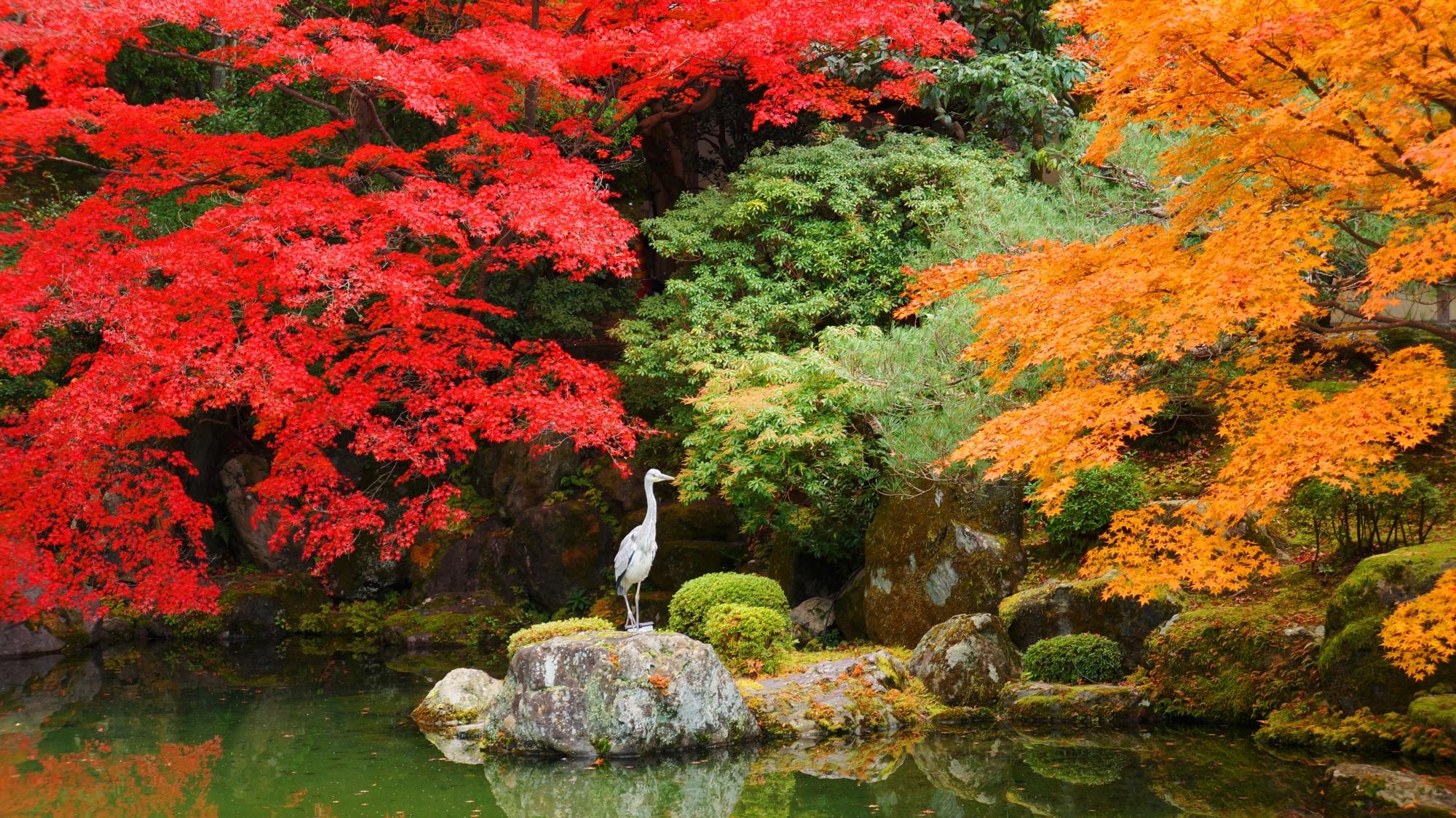 知恩院友禅苑の素晴らしすぎる紅葉と秋の情景
