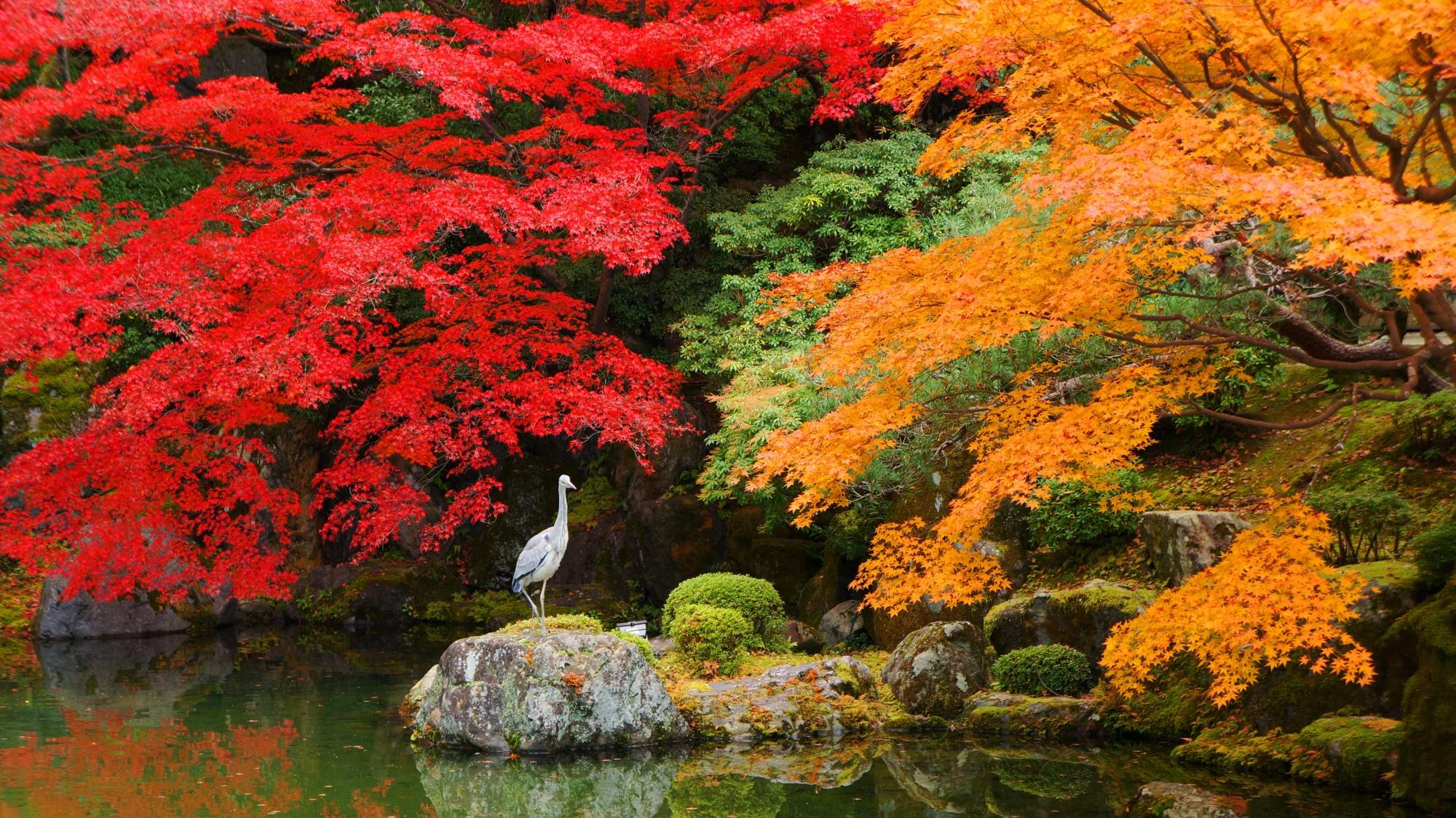 友禅苑の紅葉につつまれた岩の上の鳥