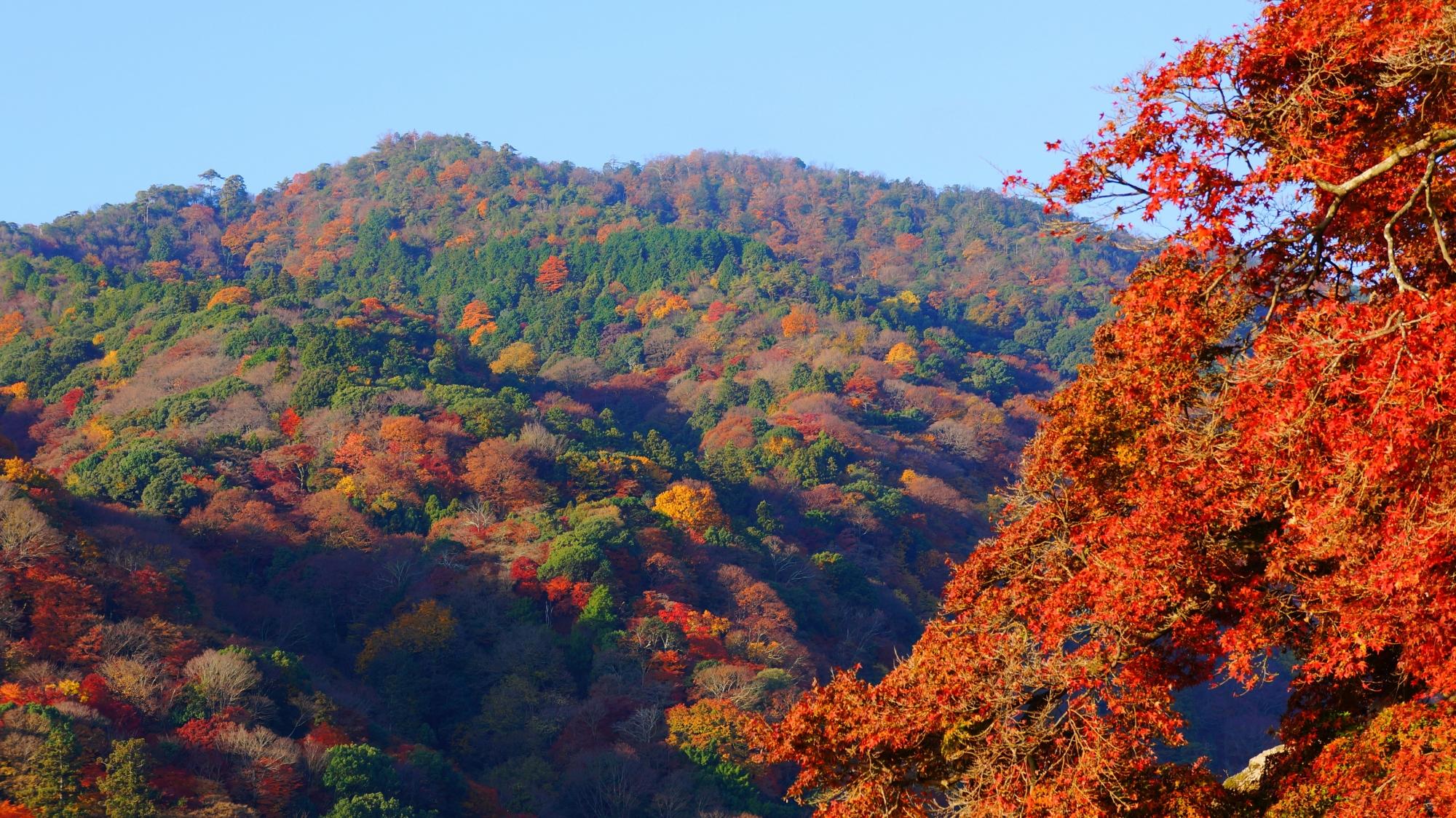 嵐山を染める桂川沿いの鮮やかな紅葉