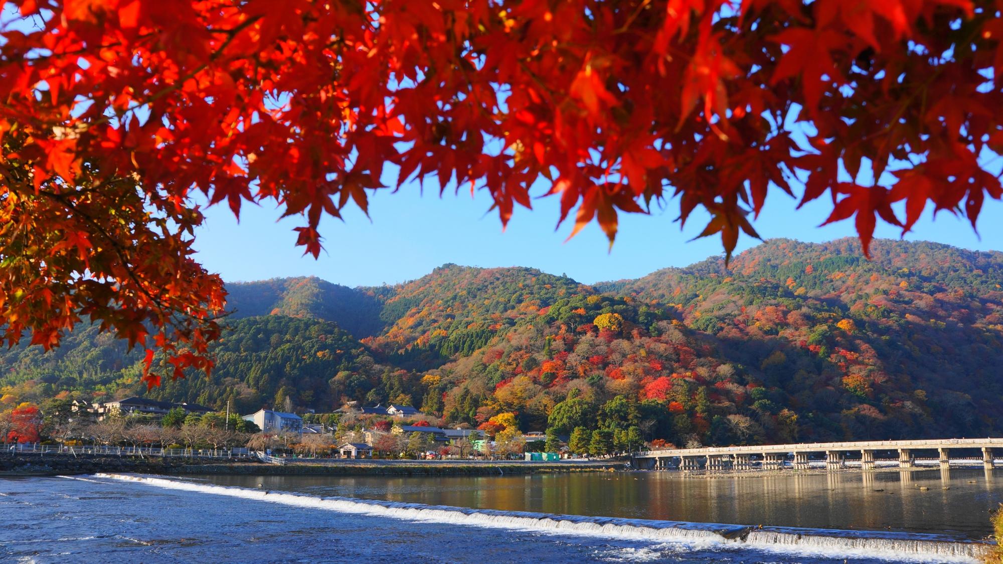 桂川と渡月橋や嵐山の素晴らしい紅葉と秋の情景