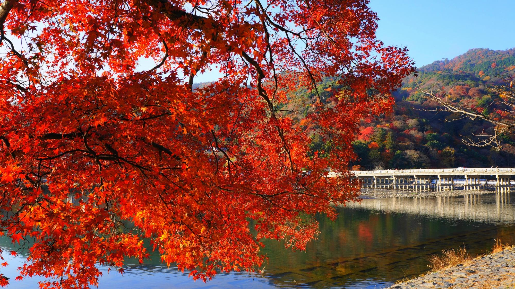 空と嵐山を覆う煌く雄大な紅葉