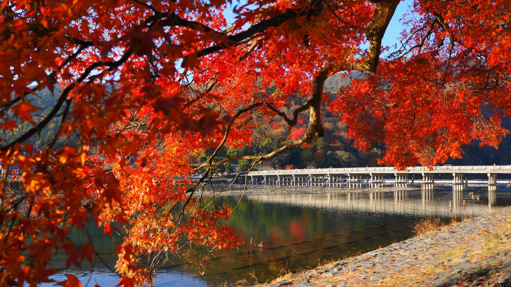 嵐山や渡月橋の人気観光名所の煌びやかな秋の風景