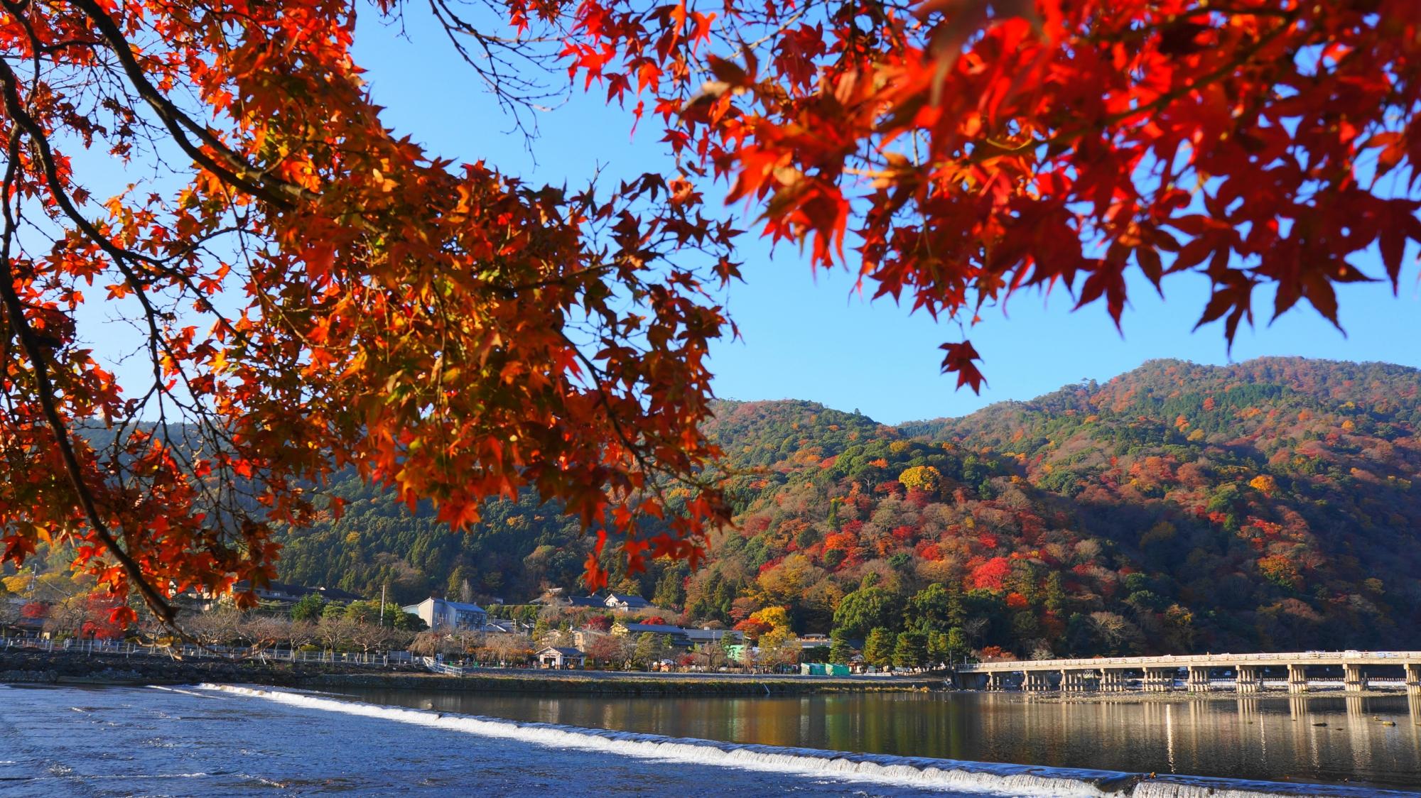 降り注ぐ赤い紅葉と嵐山の絵になる秋の光景
