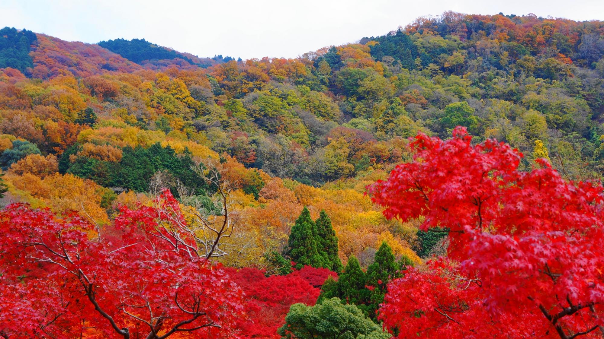 八瀬のほんのり色づく山々