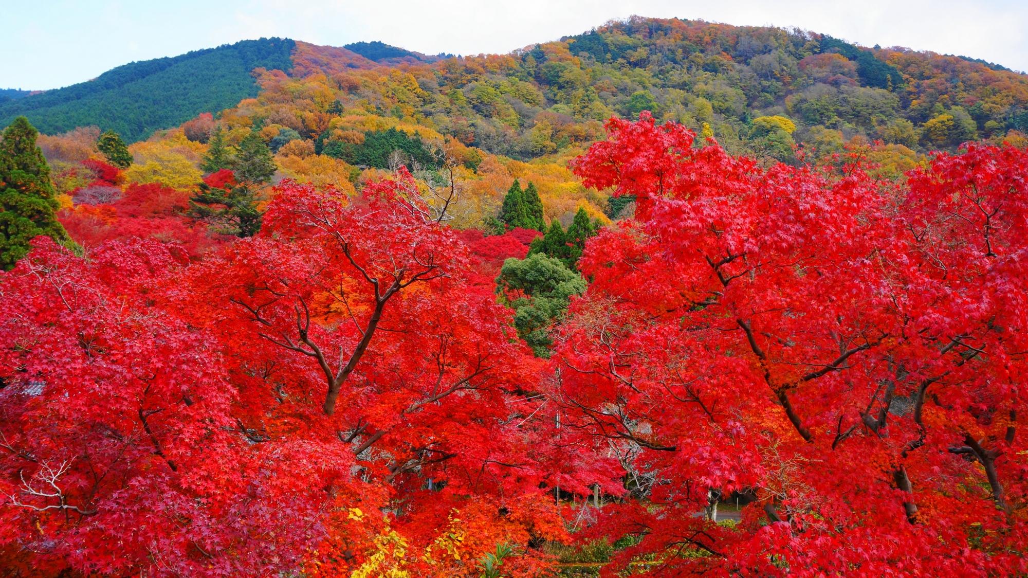 京都バスの八瀬バス停付近の紅葉