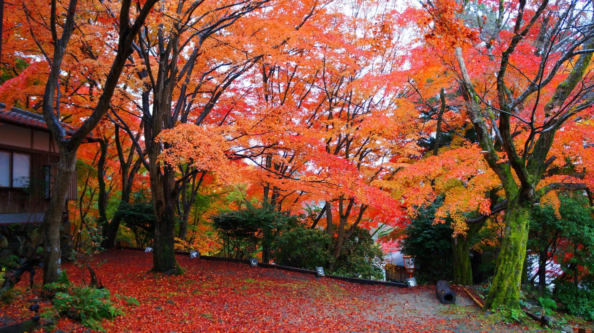叡山ケーブル八瀬駅付近の紅葉