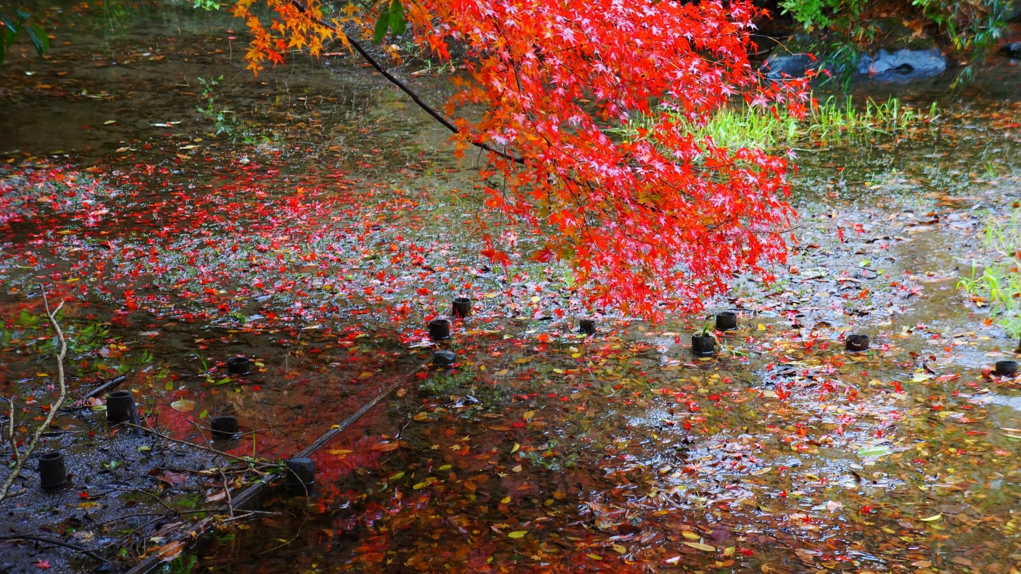 八瀬の水辺の風情ある紅葉