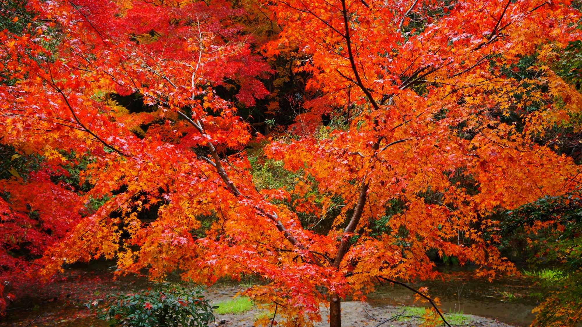 高画質 写真 八瀬 紅葉
