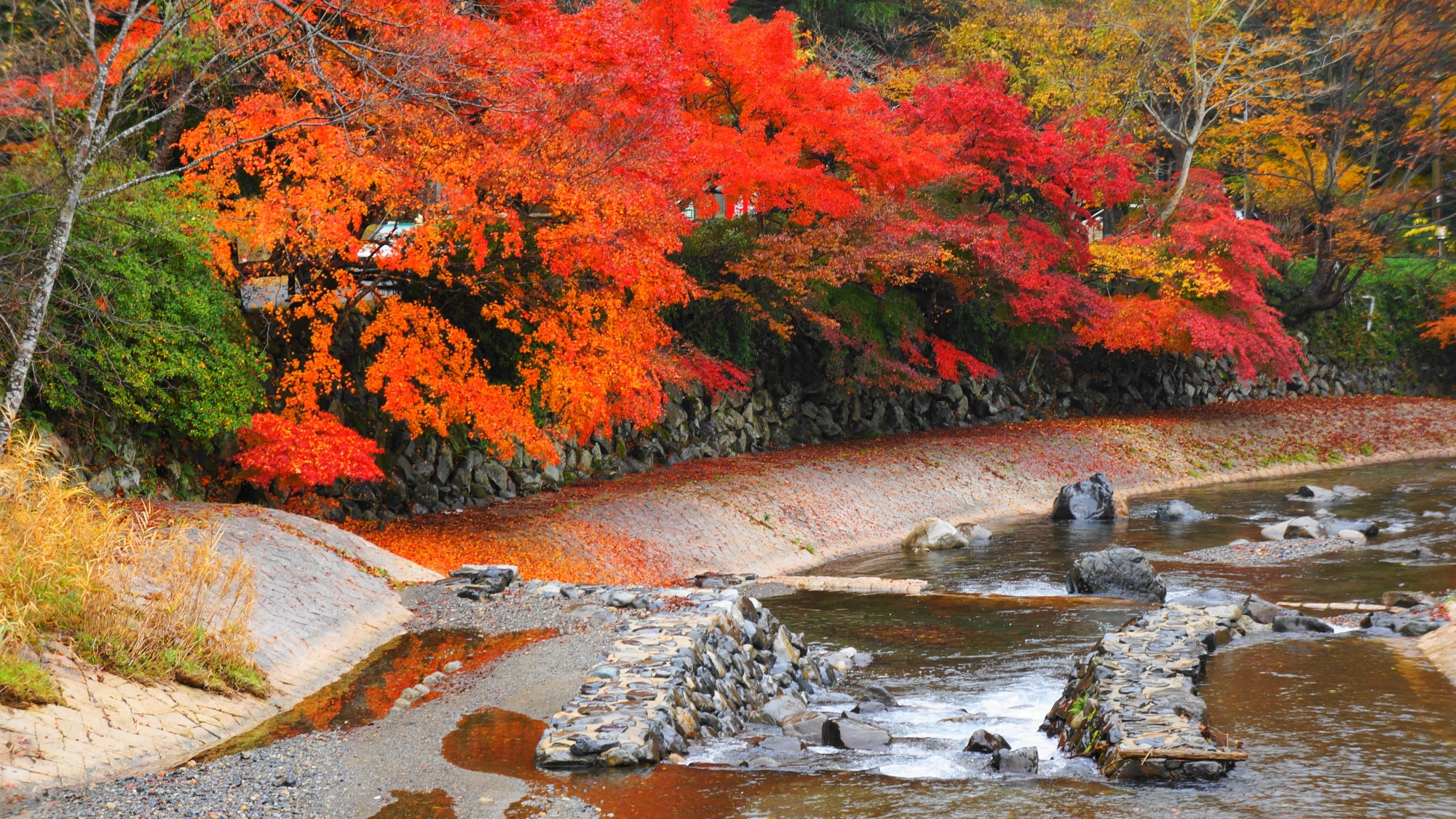 京都八瀬の紅葉の名所の高野川
