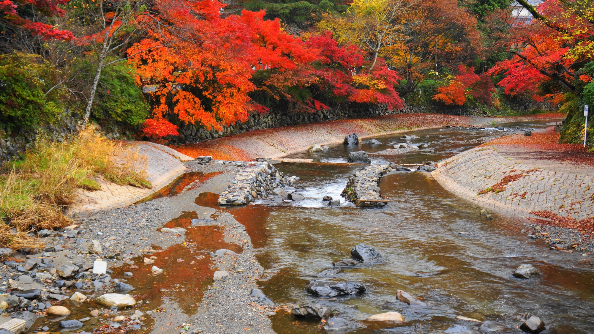 高野川 高画質 紅葉 写真