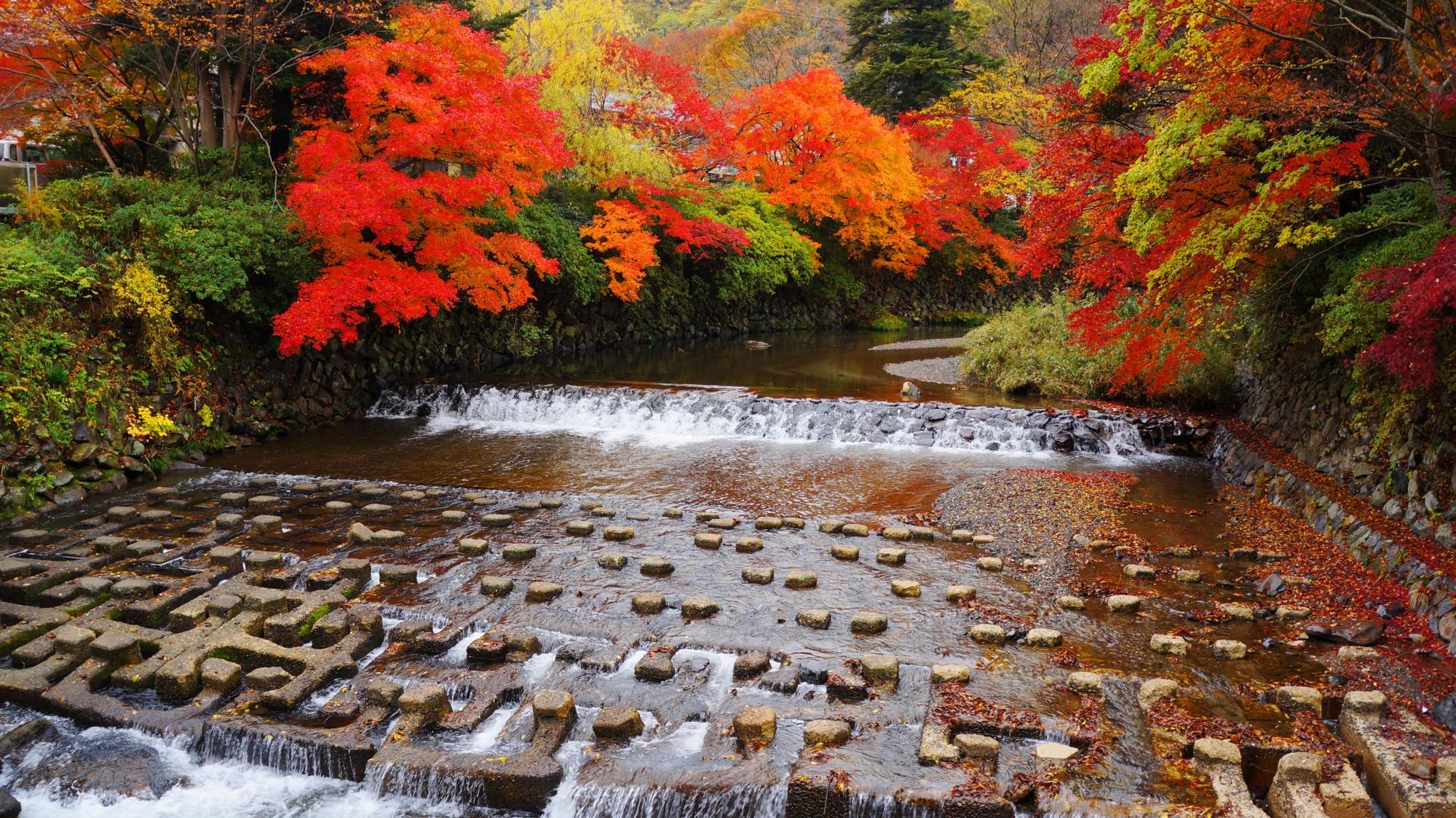 八瀬と高野川の素晴らしい紅葉と情景